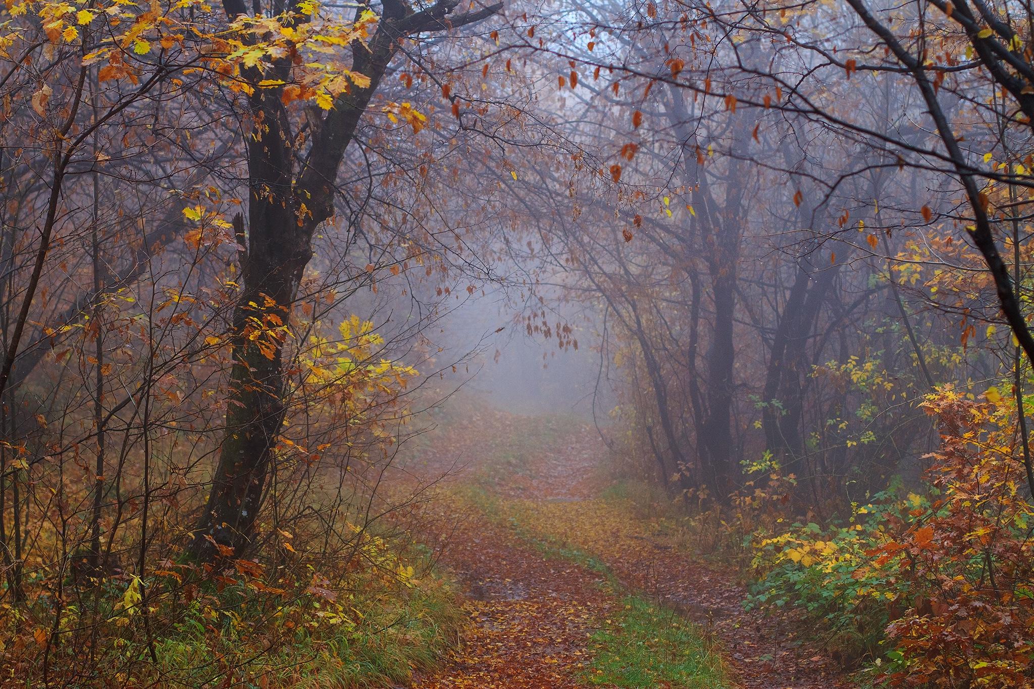 Autumn by White Raven