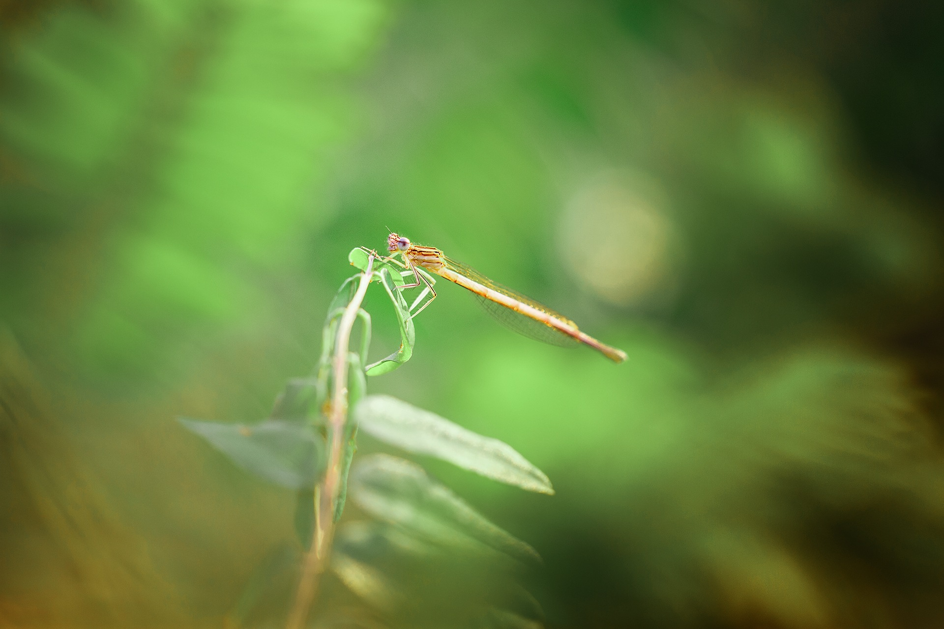 Dragonfly by White Raven