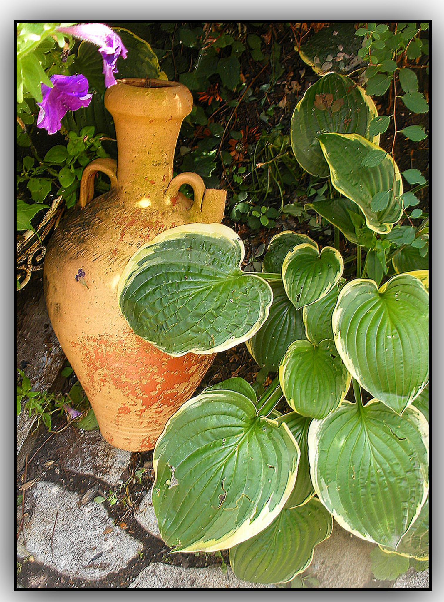 Terracotta... by rosa_linda