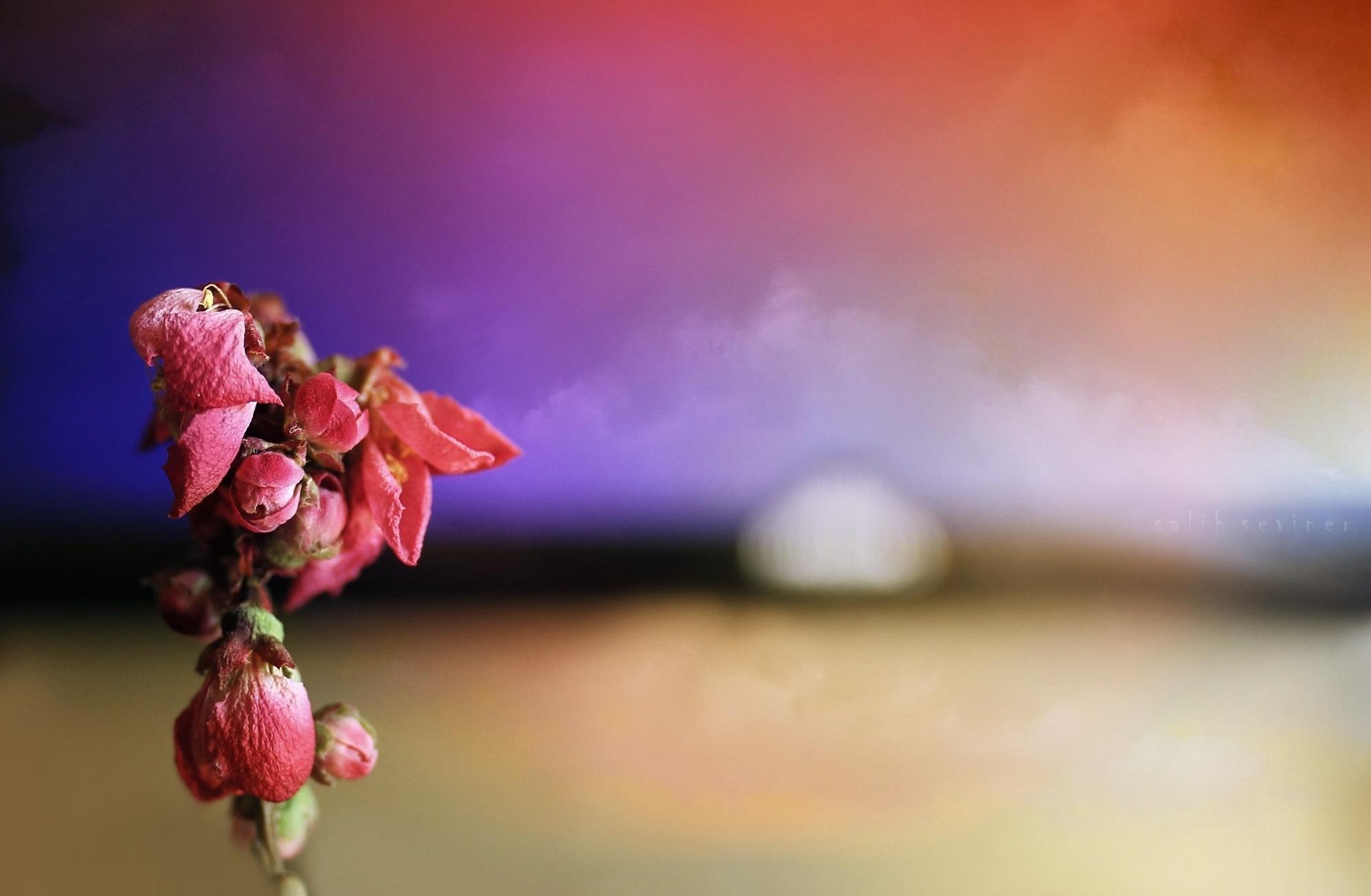 death of a flower.. by Salih Seviner