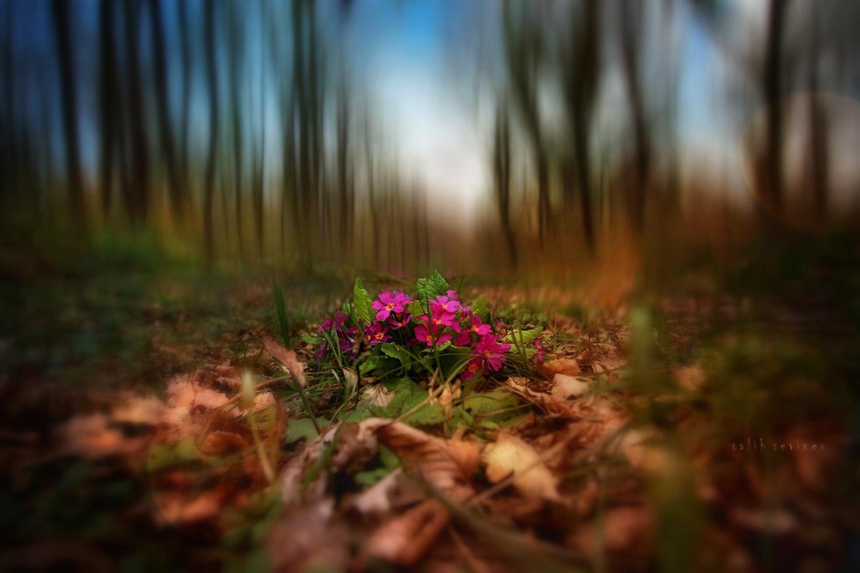 poetry of nature.. by Salih Seviner