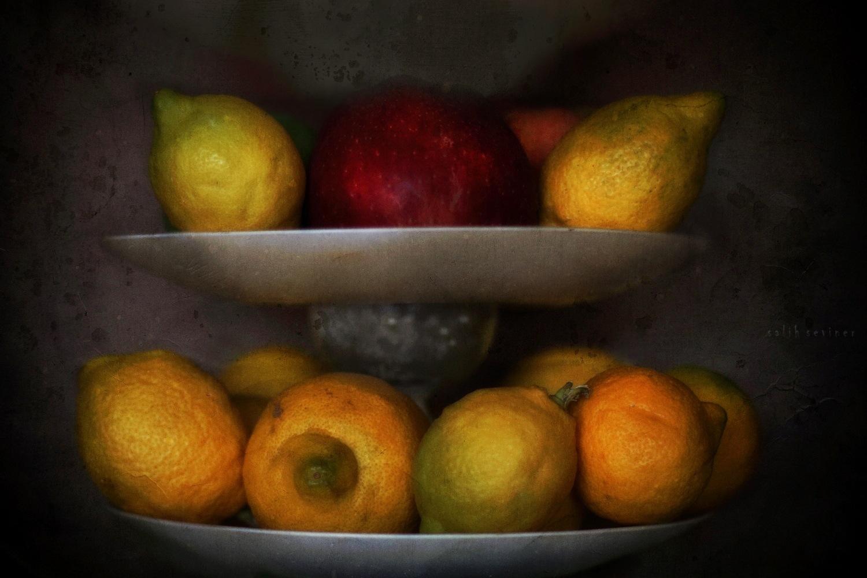We must eat.. by Salih Seviner
