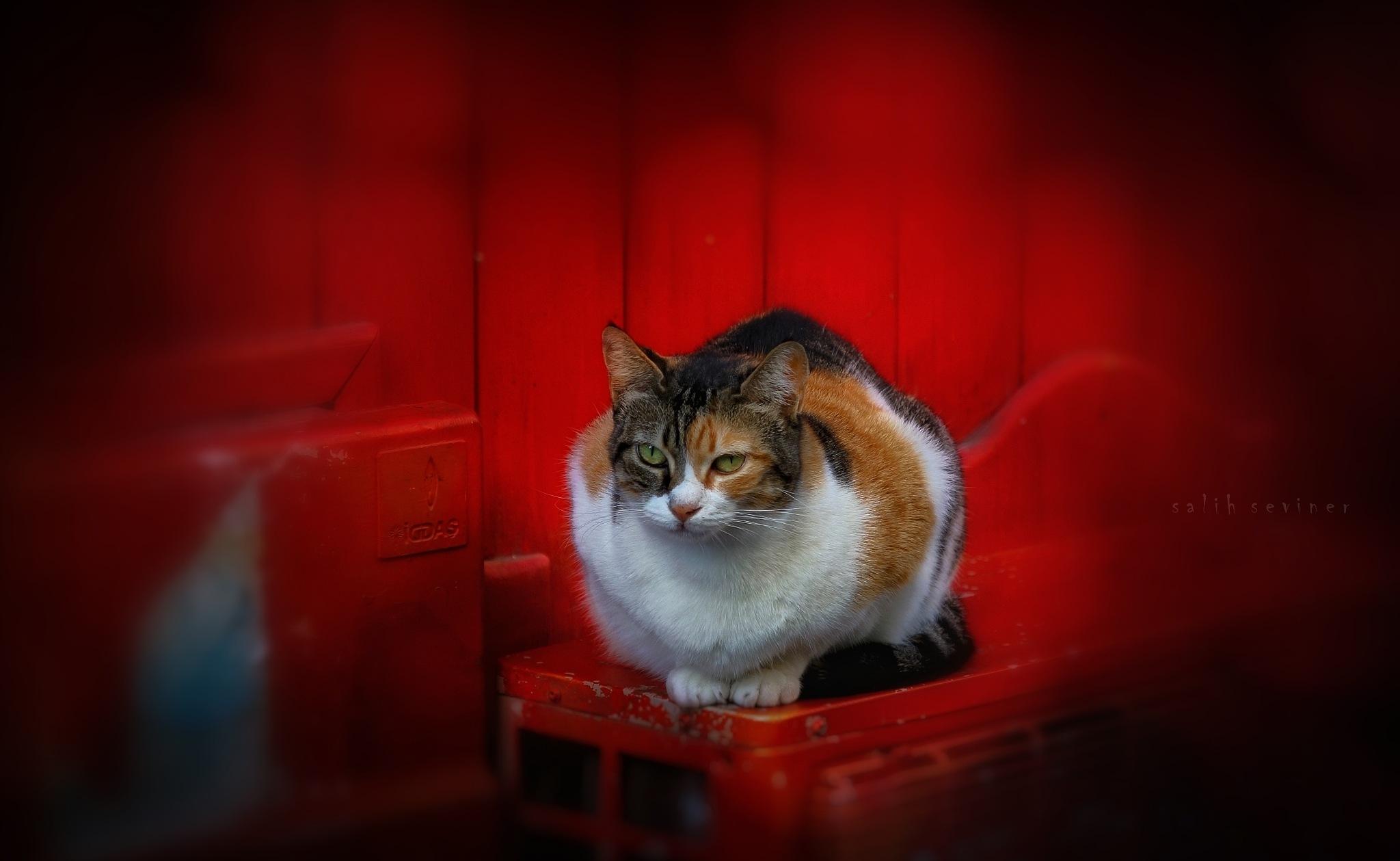 Cat stories - World Animal Day.. by Salih Seviner