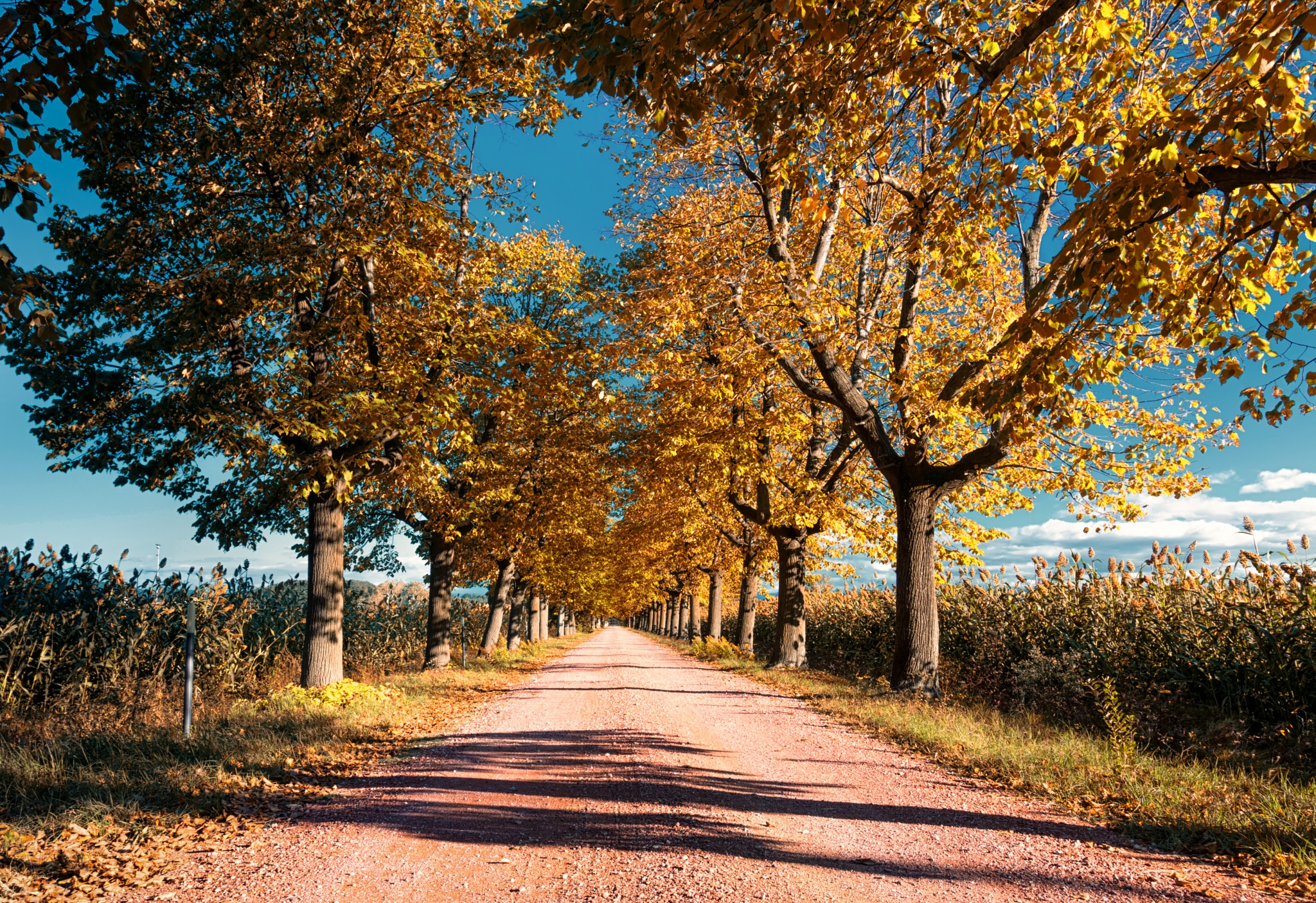 Autumn is Coming by Michele Marrucci