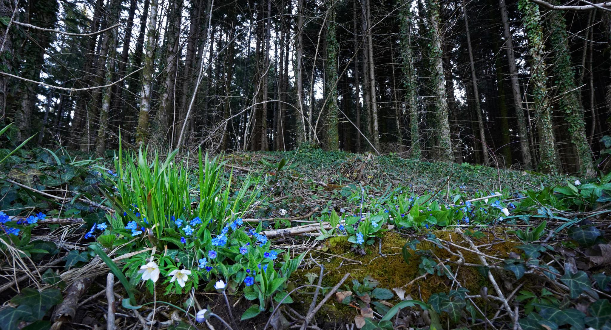 Flowering undergrowth by Marko Erman