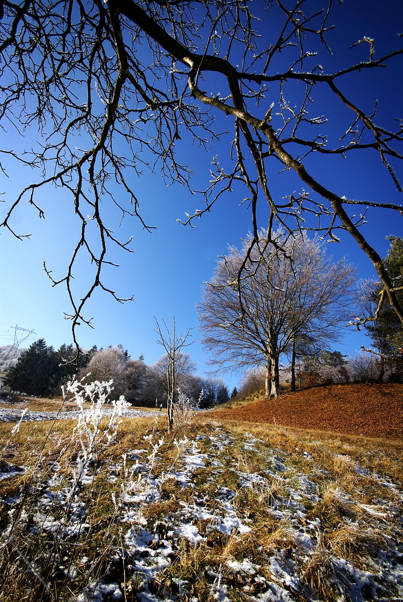 A taste of winter by Marko Erman