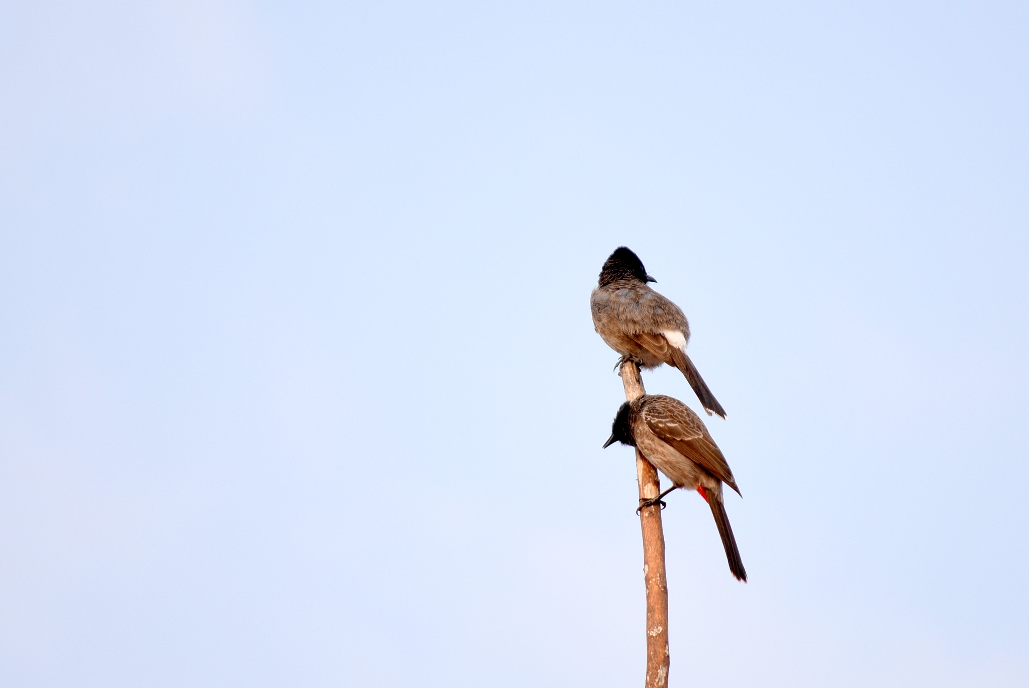 Two birds by Sidhi Swarnakar