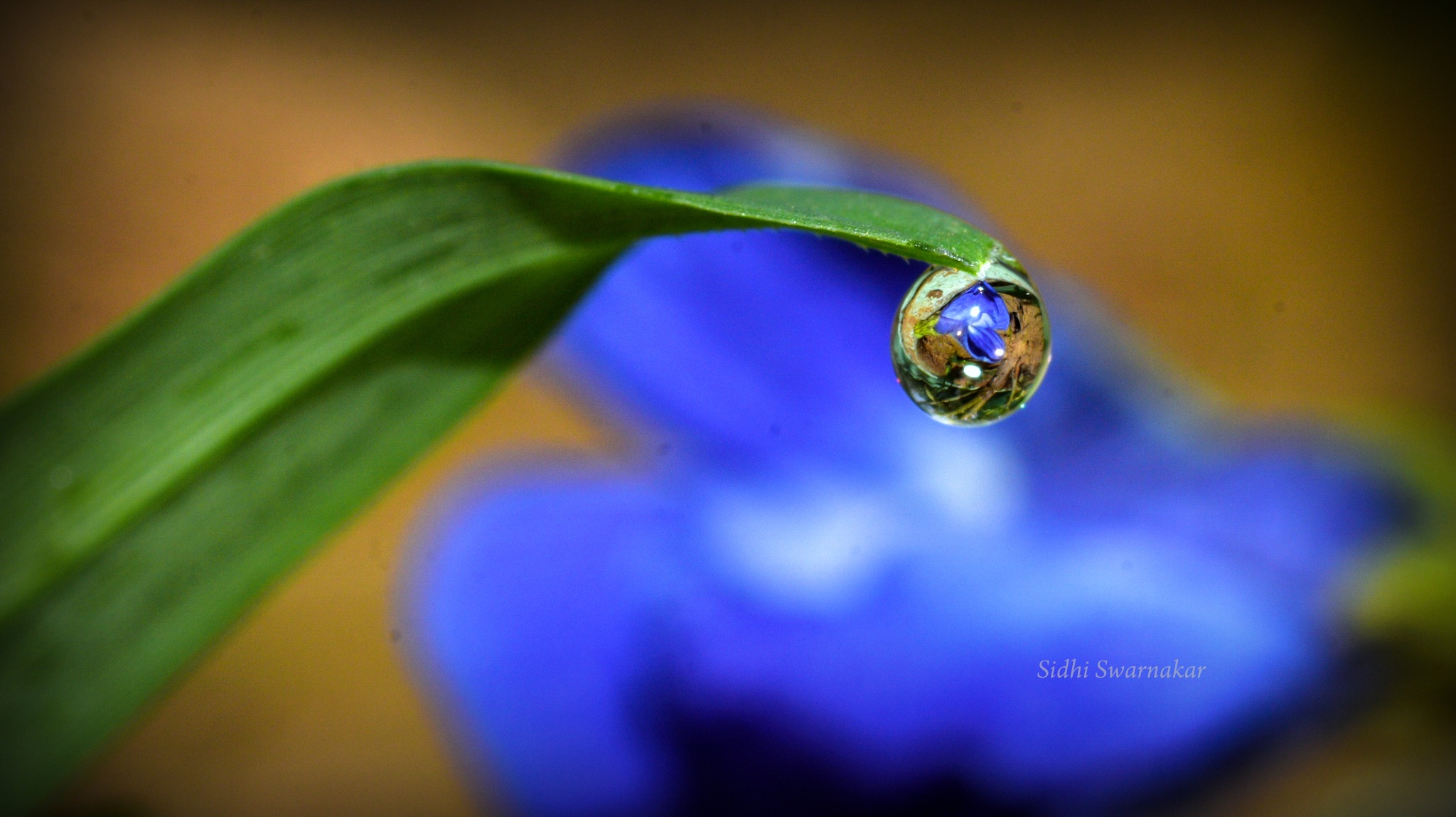 Photo in Macro #reflection #blue #flower #green #grass #closeup