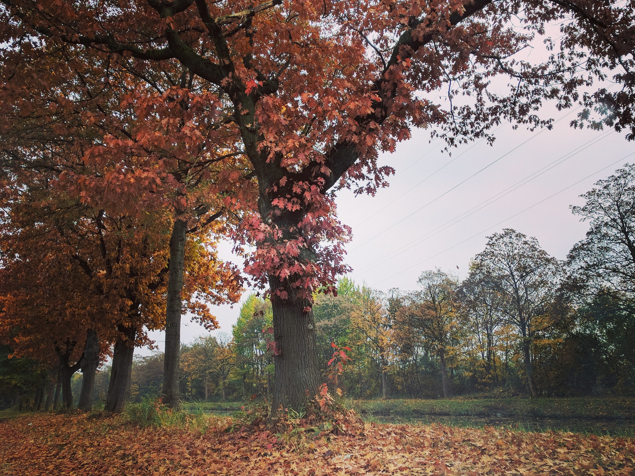 Autumn is beautiful by ifocus