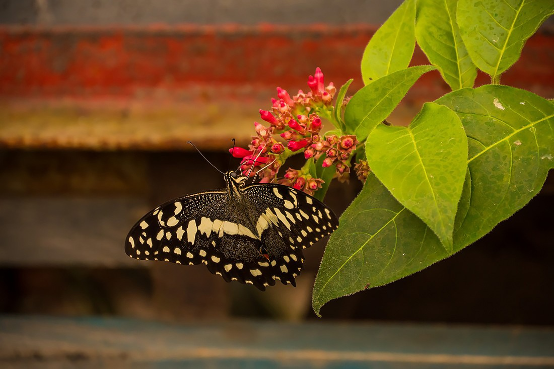 Butterfly & colors by ifocus