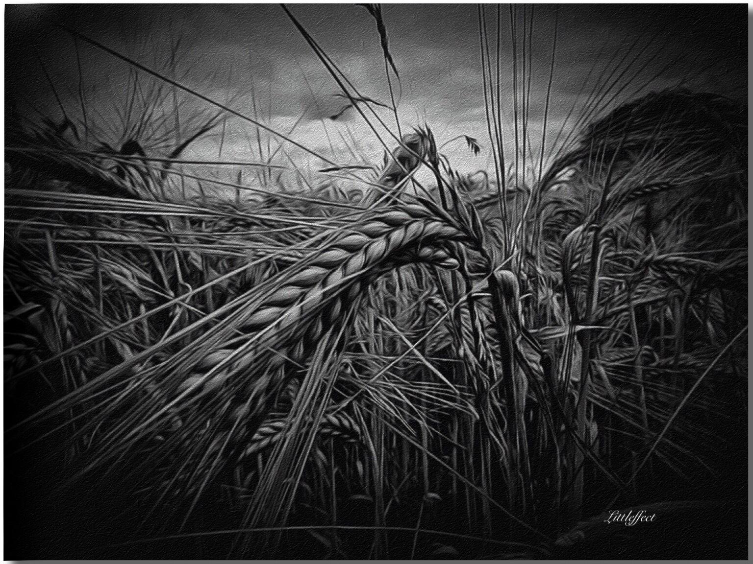 Summer Harvest  by Littleffect