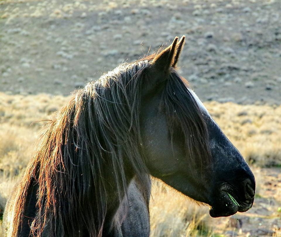 Horse by Laurie Puglia