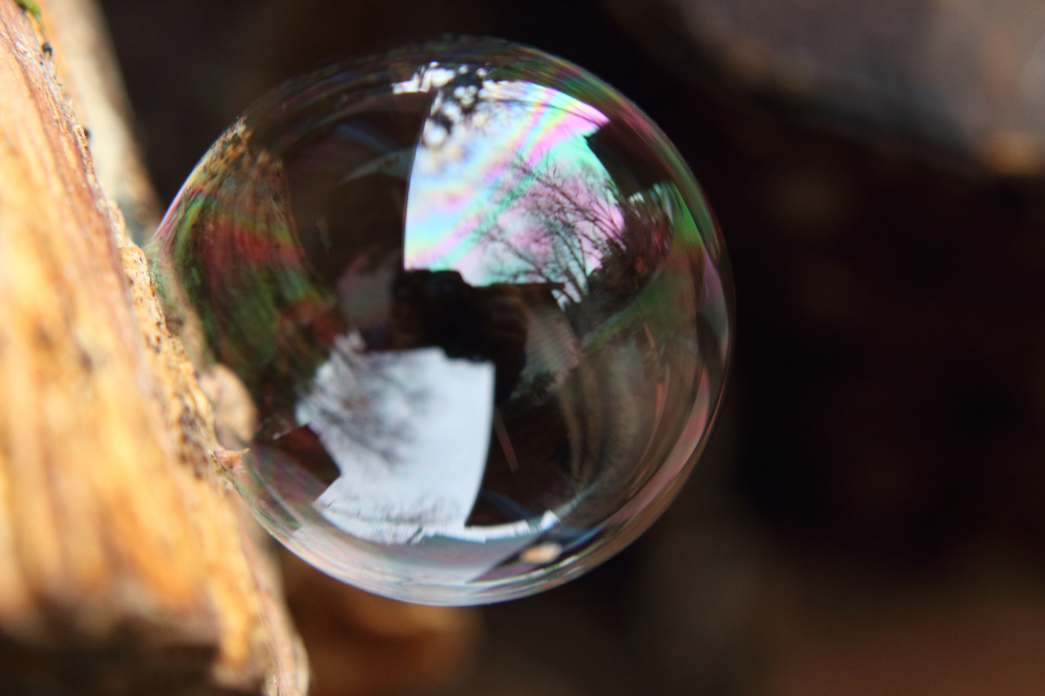 The Perfect Bubble by Laurie Puglia