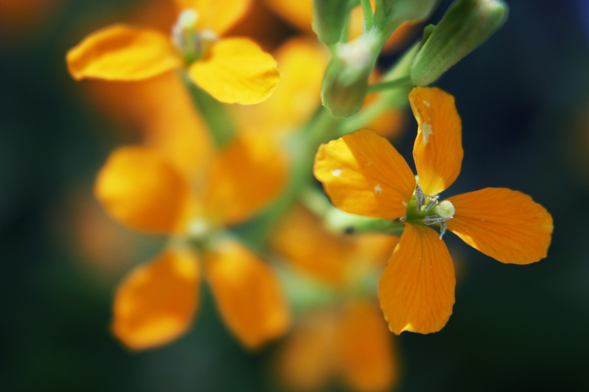Photo in Nature #orange plant flora lyoung40