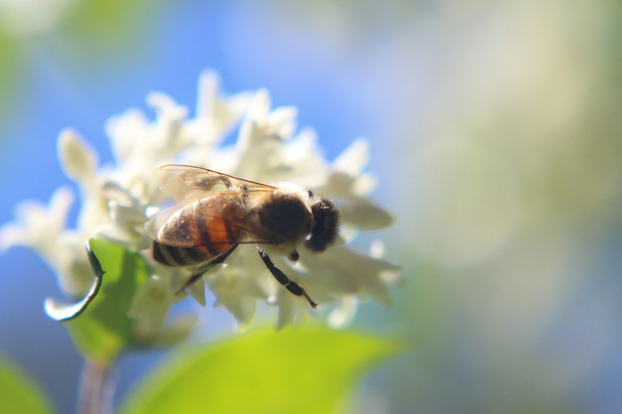 Beautiful Bee On Flower by Laurie Puglia