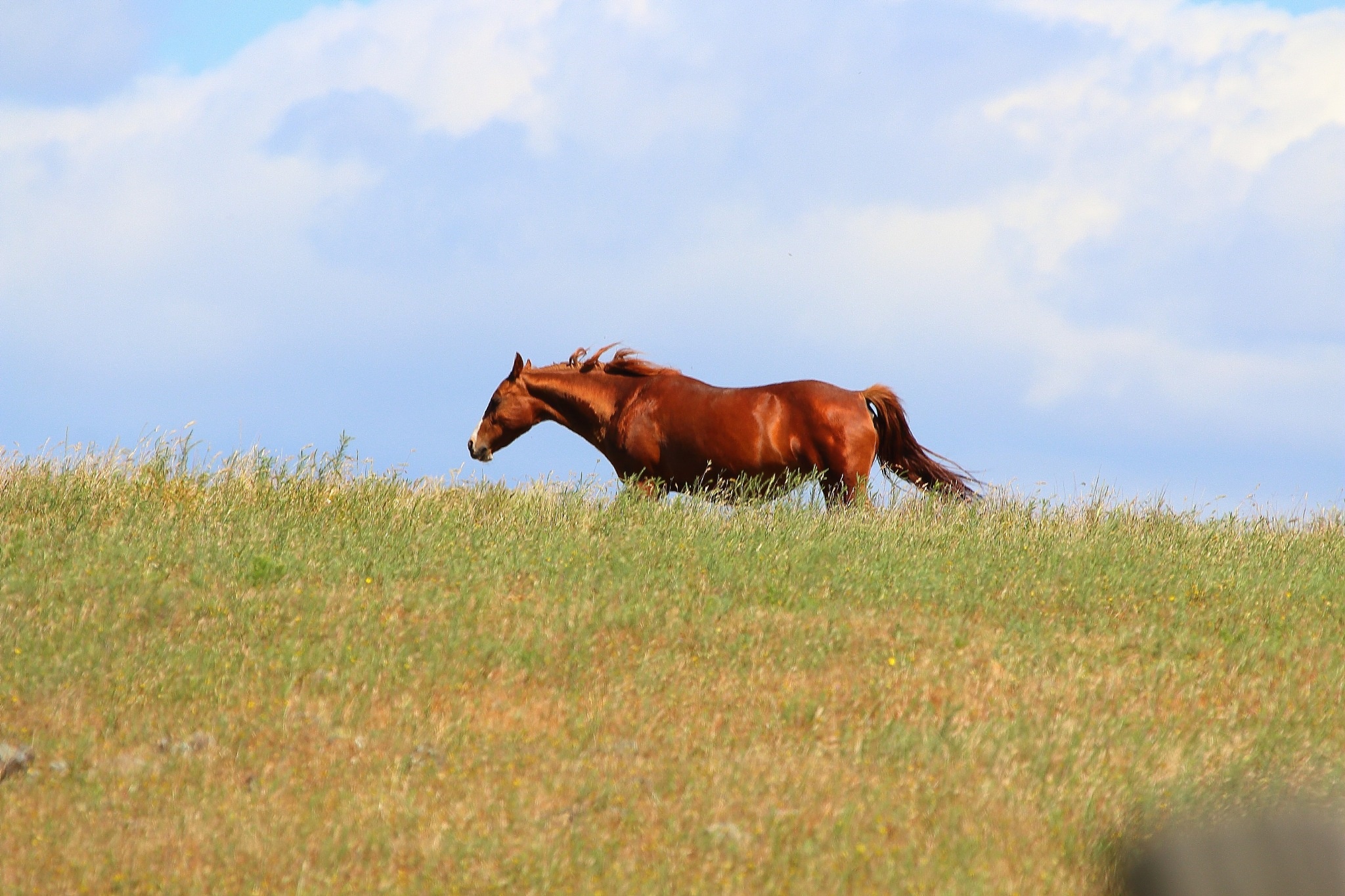 On A Wide Open Range by Laurie Puglia