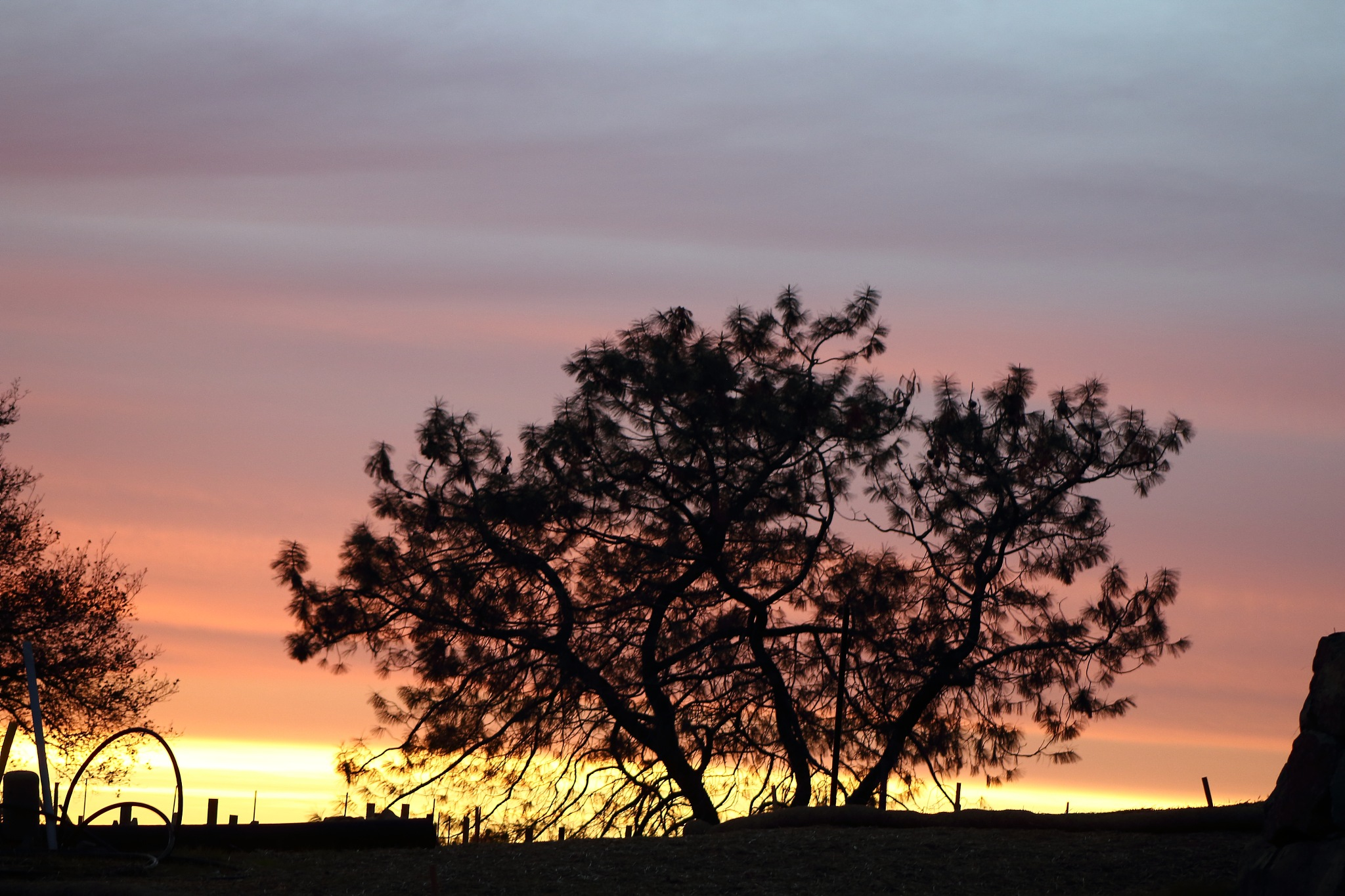 Sunset Trees by Laurie Puglia