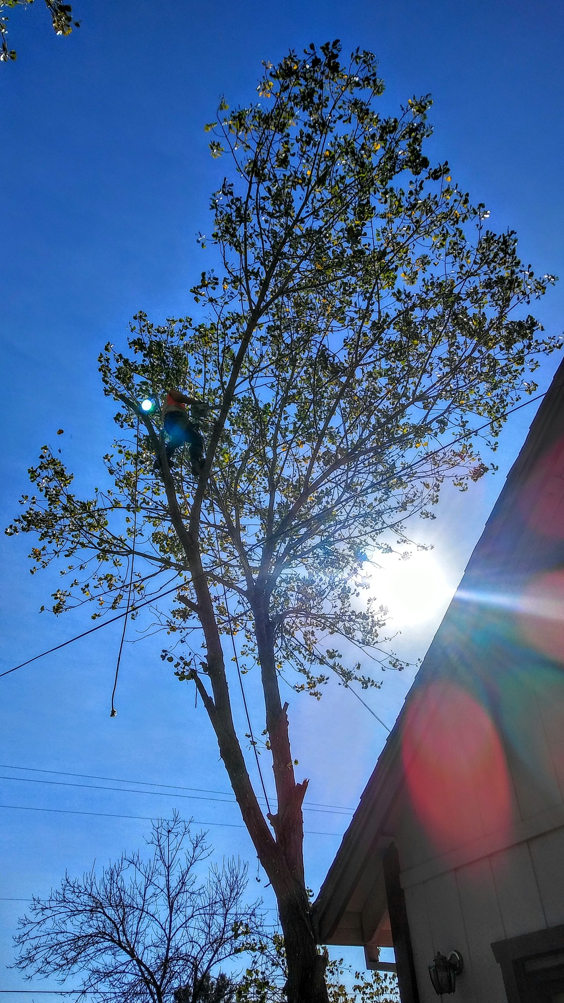 Tree Removal by Laurie Puglia