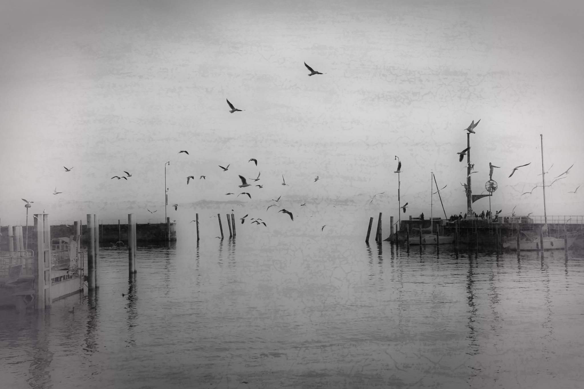 *** by Dario Sebek