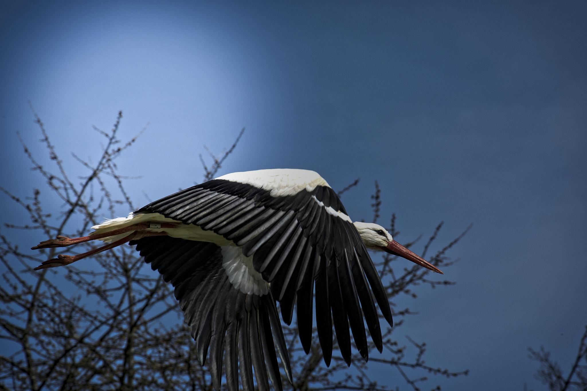 stork by Dastine