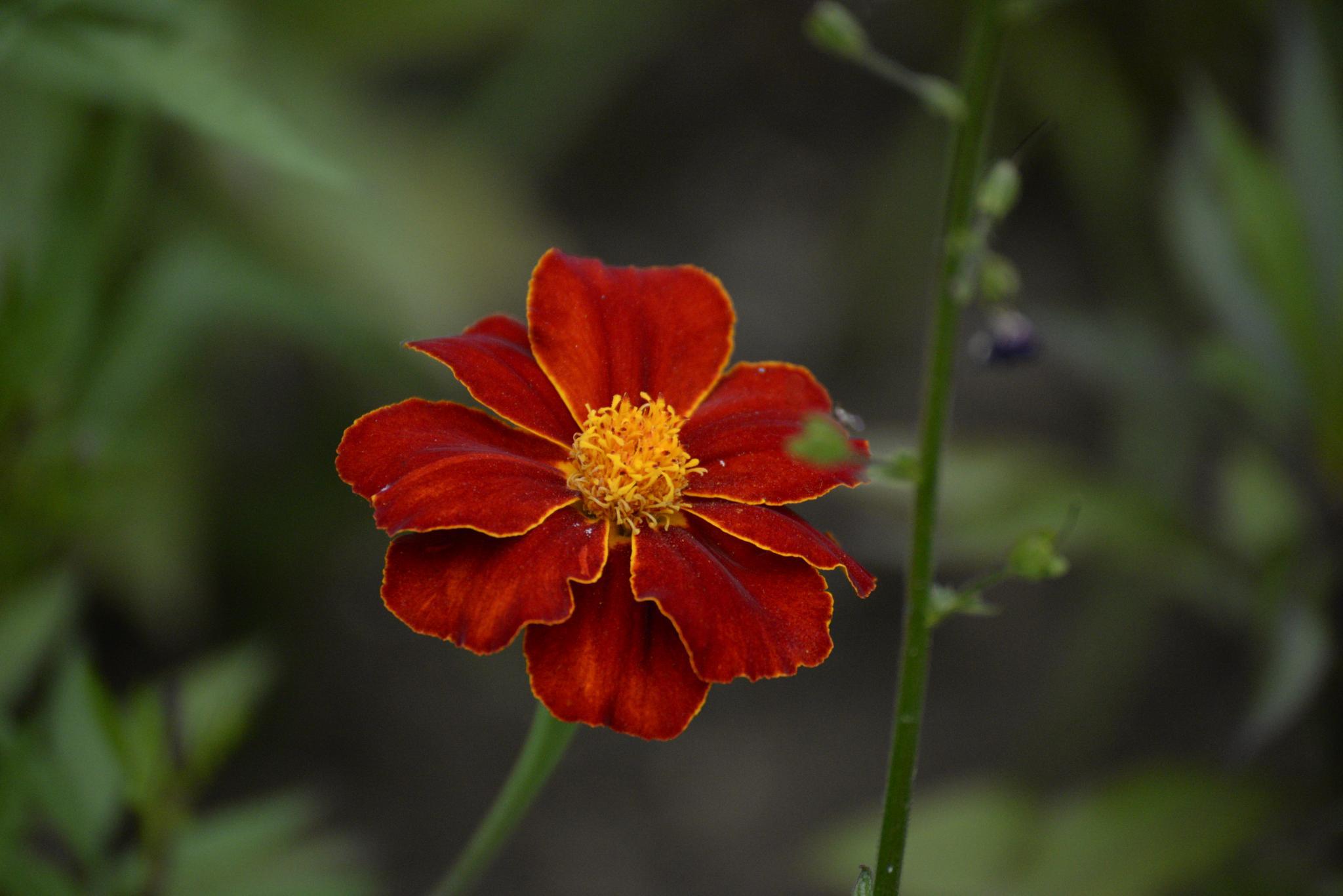 Photo in Macro #flower #nature #uk #aligeeach