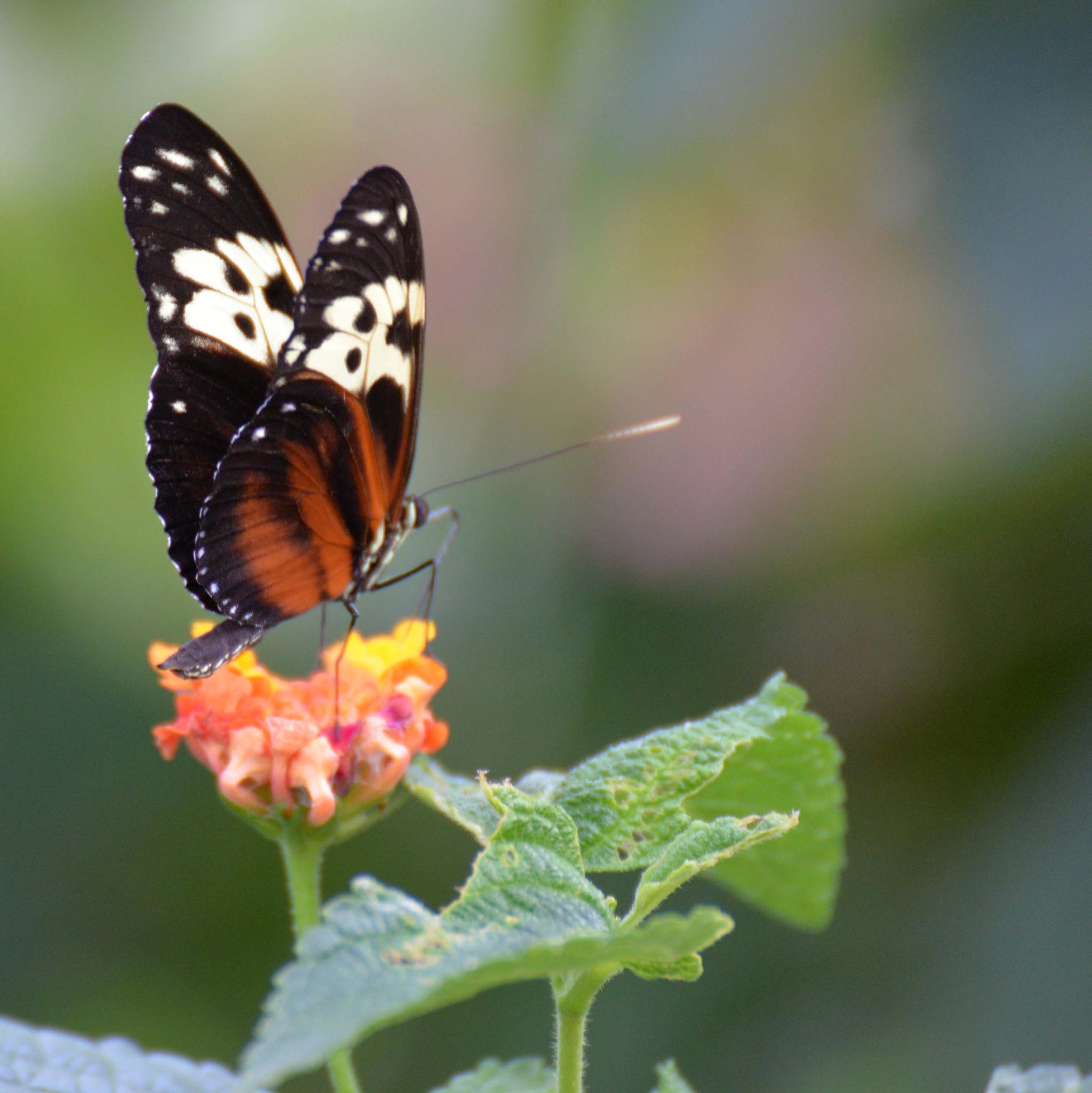 Butterfly On Flower by Aligeeach