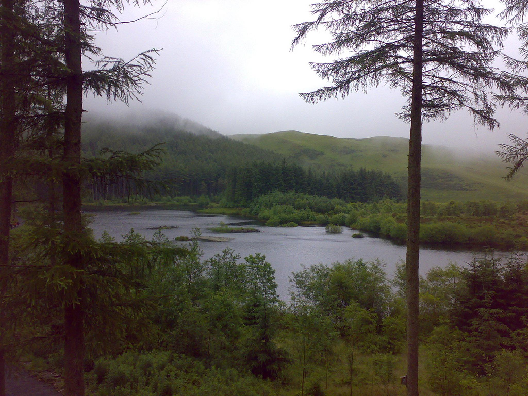 Morning Mist by Aligeeach