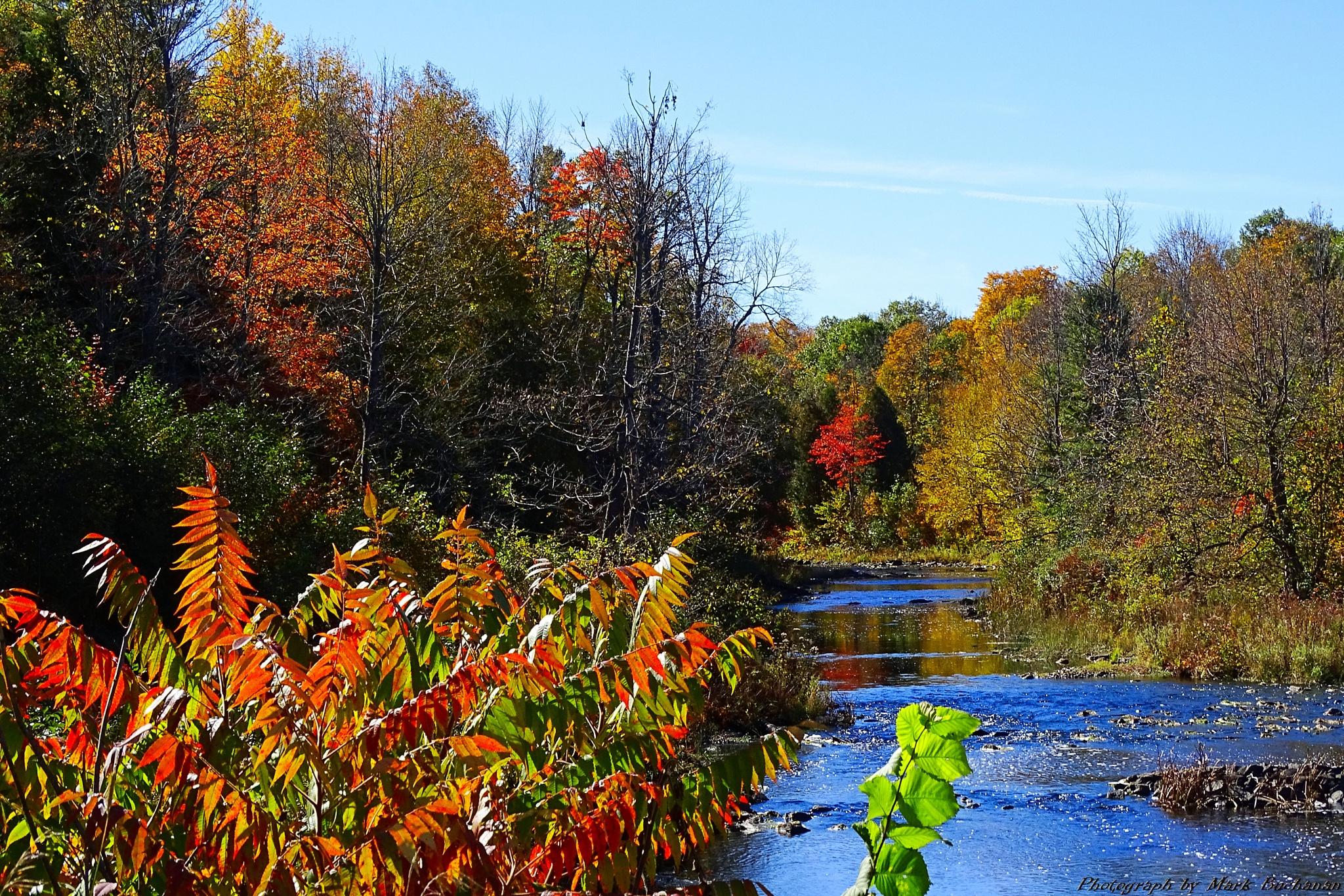 Fall colours #16 by Mark Buchanan