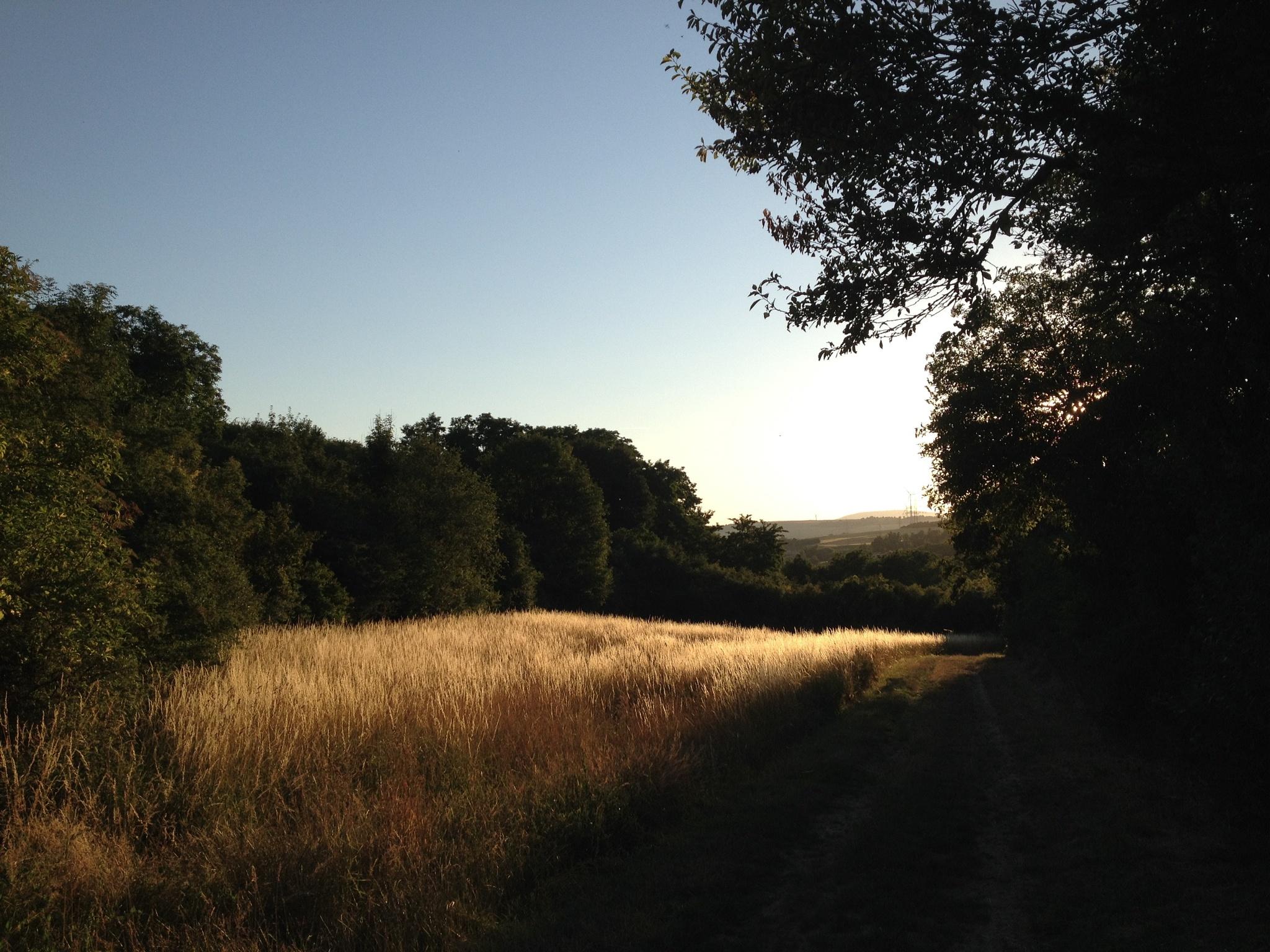 Golden pasture by Katy Haecker