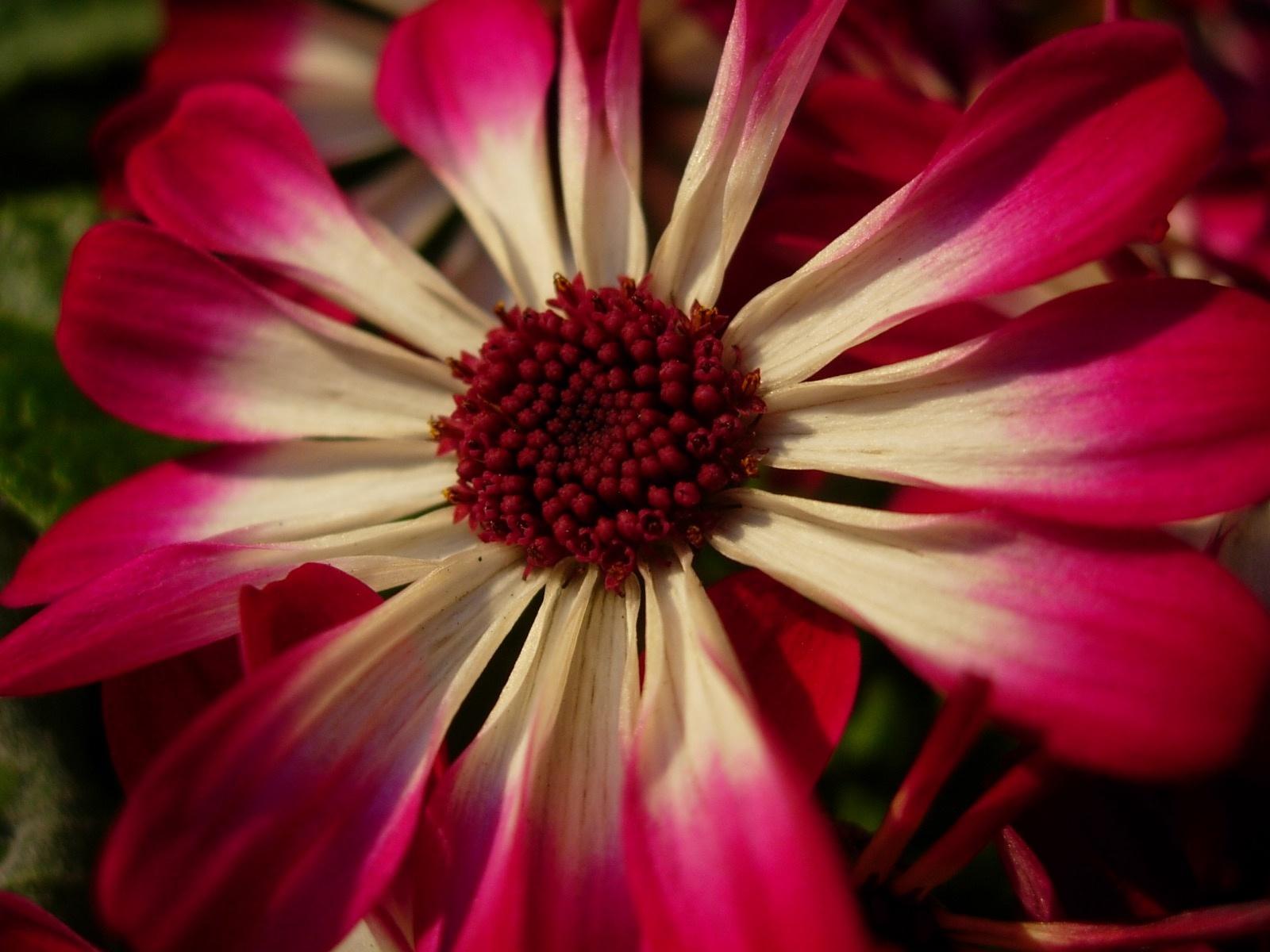 Photo in Macro #flower #blossom #+macro