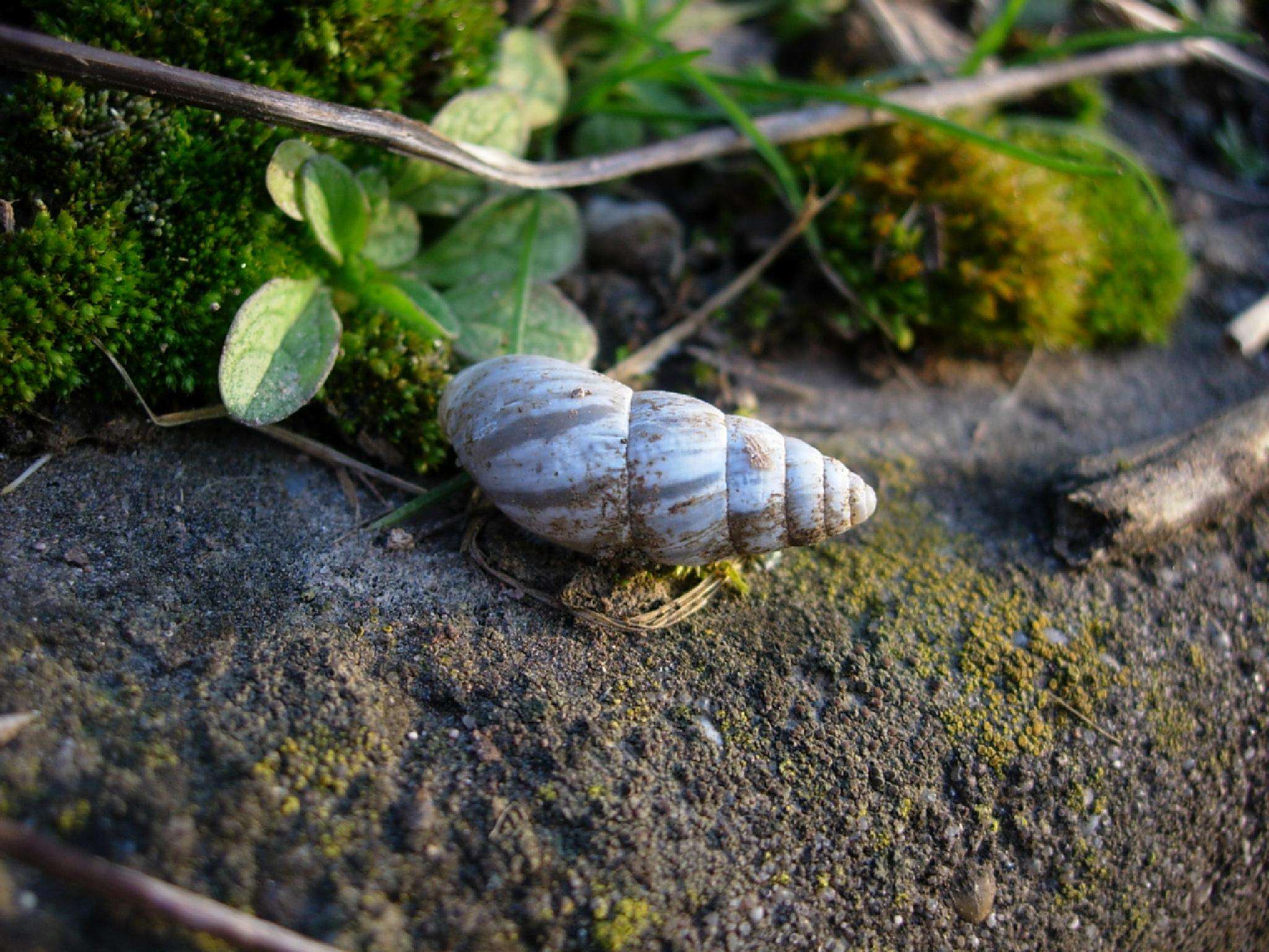 Little Snail in the Cold by Katy Haecker