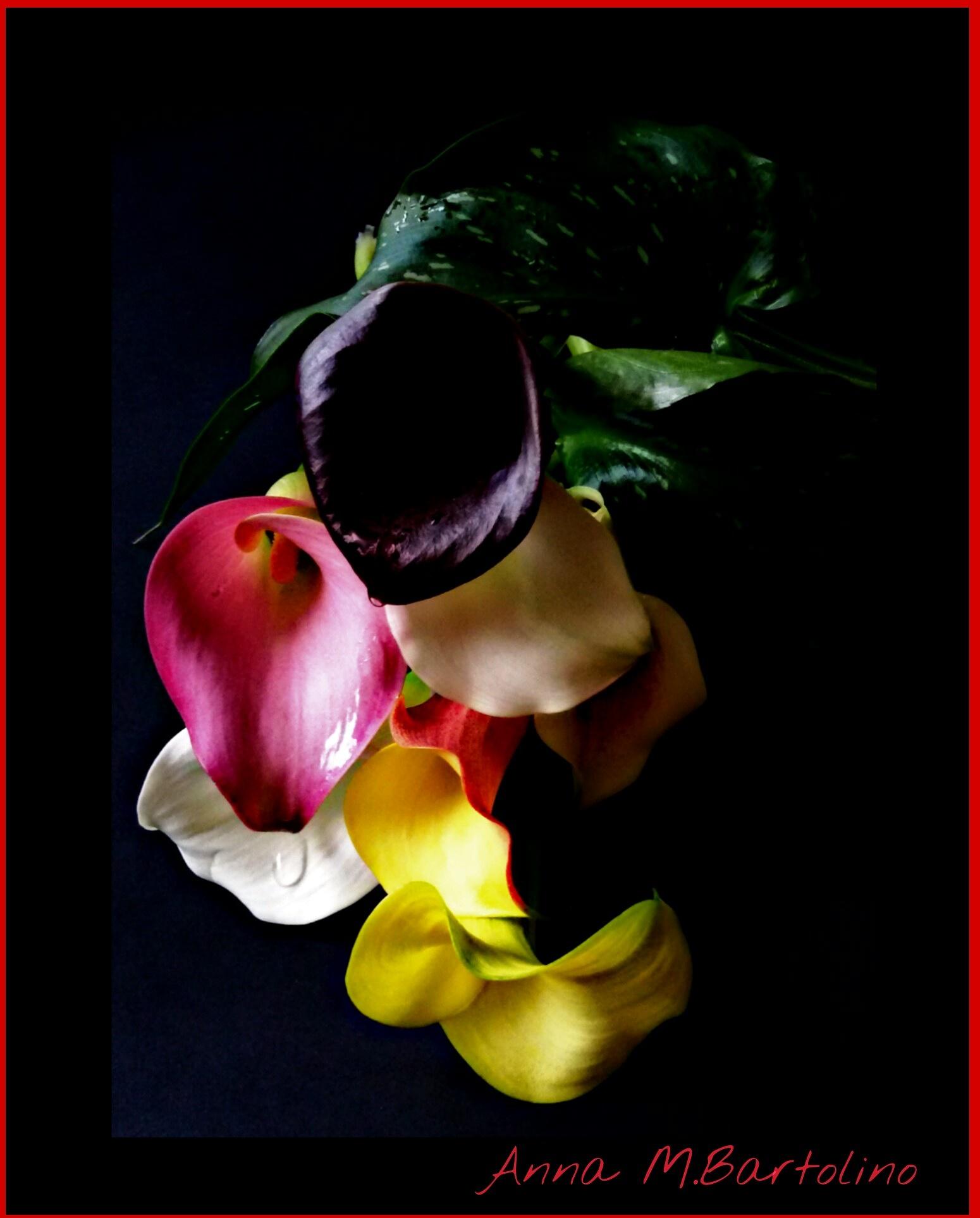 colori  by Anna Maria Bartolino