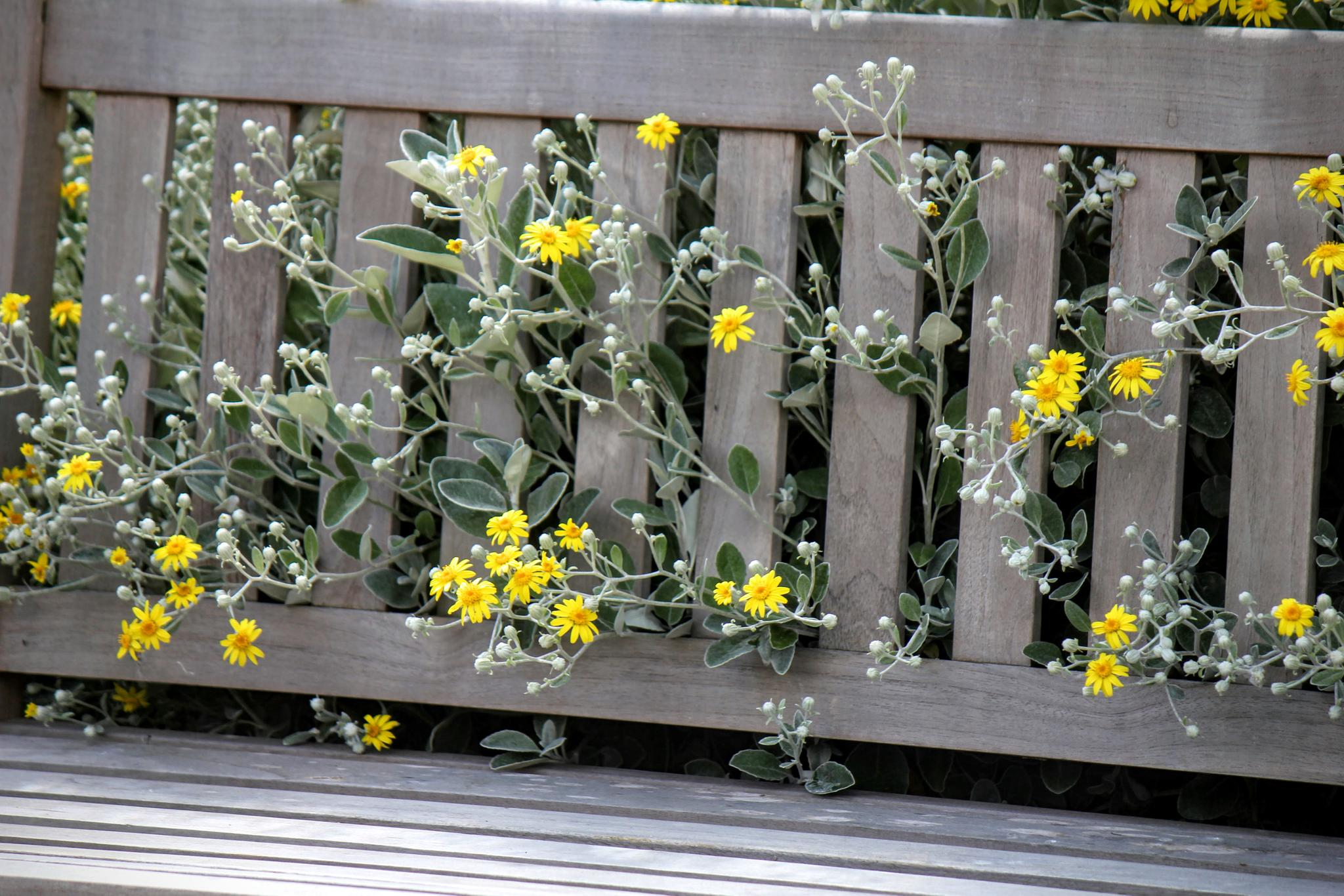 Photo in Nature #nature #flowers #bench #flower #summer