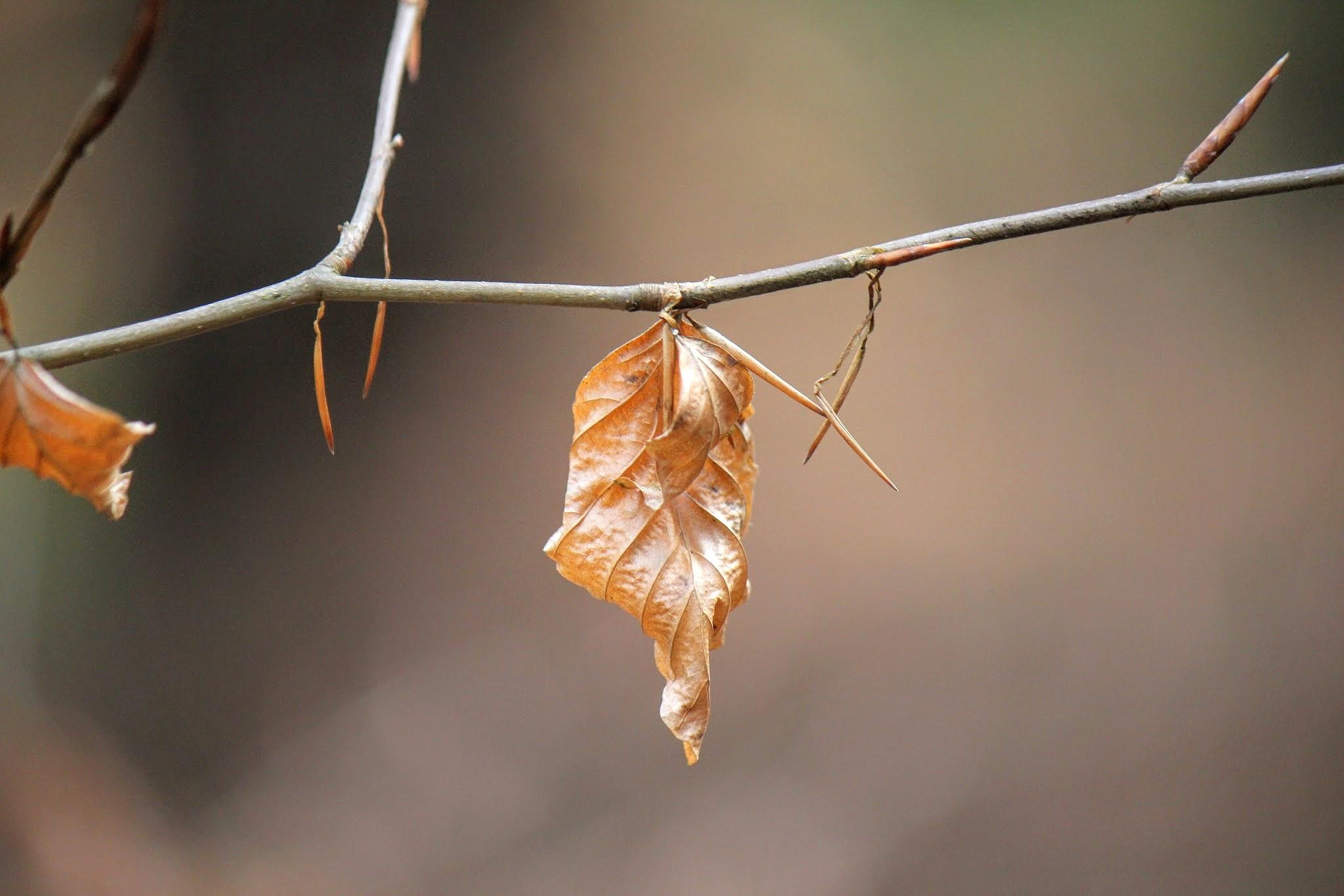 Dead Leaf by CharlottesSnaps