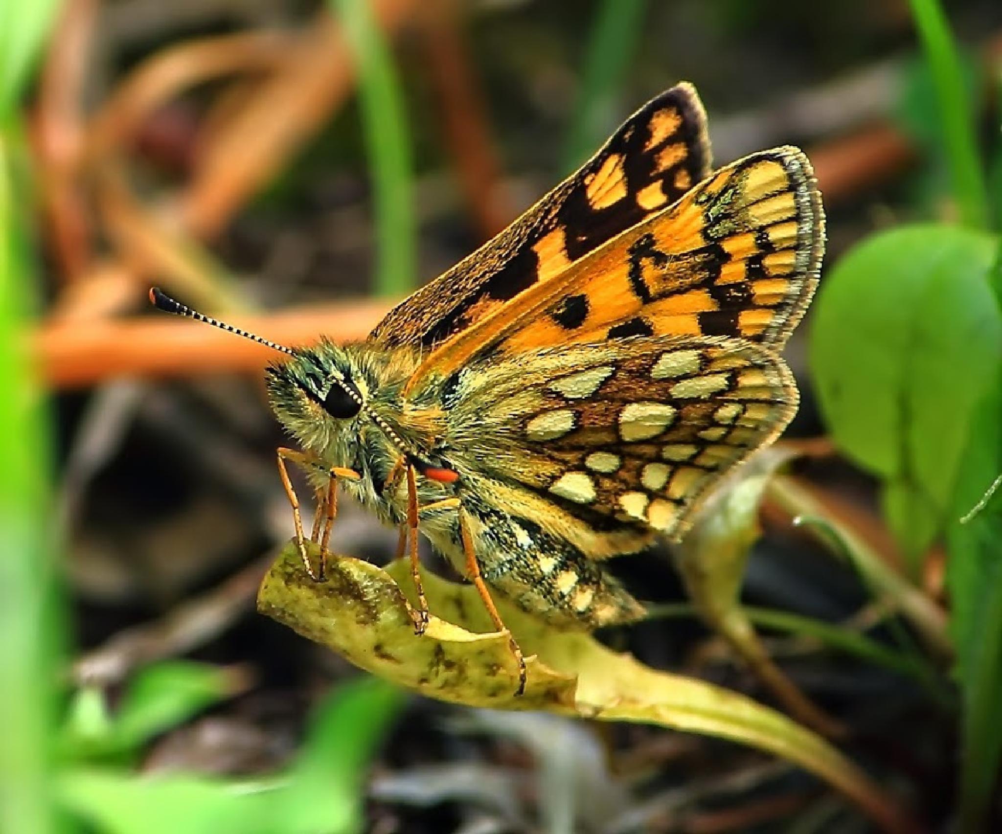butterfly by Vasiliy Kotkov
