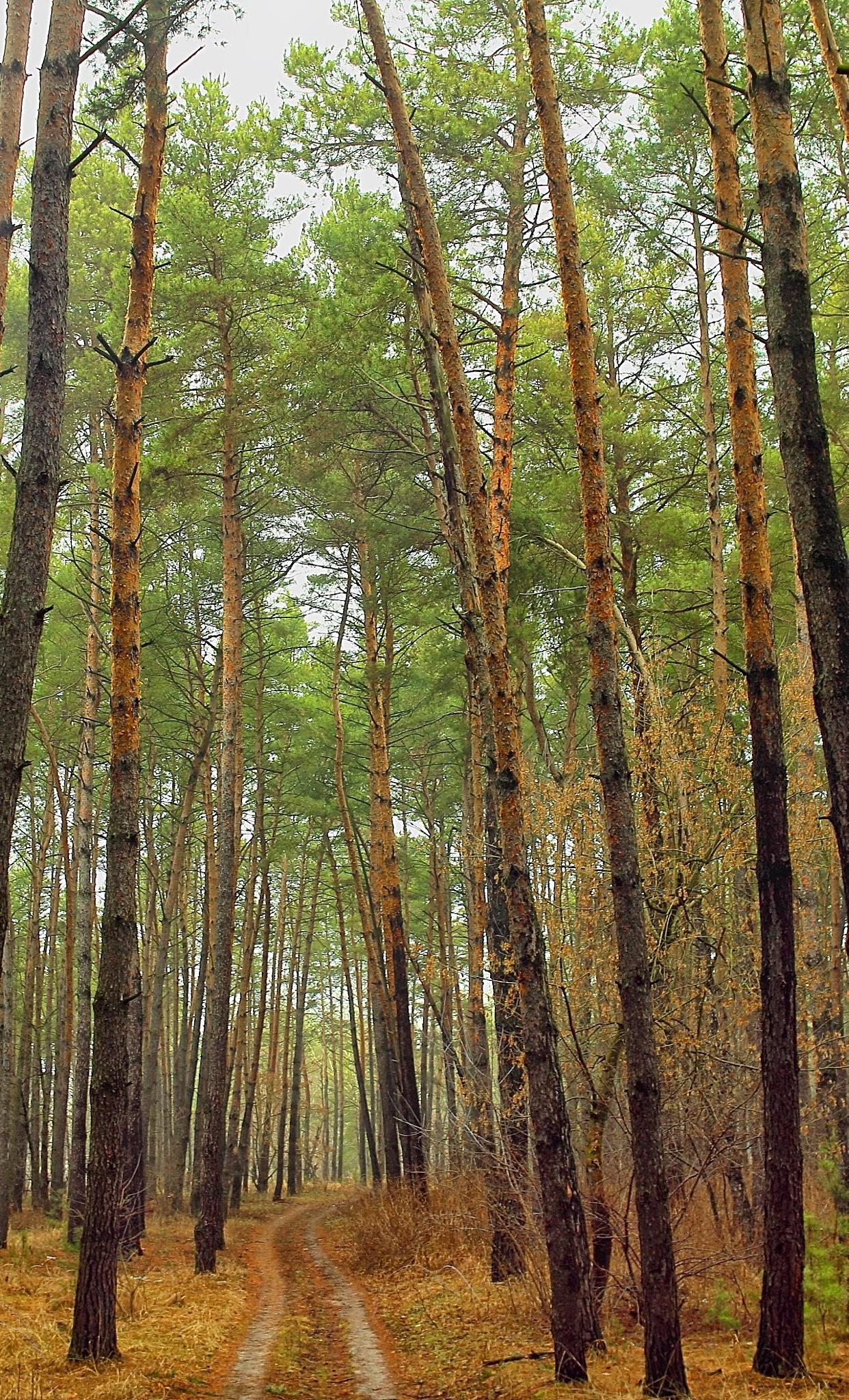 Forest by Vasiliy Kotkov