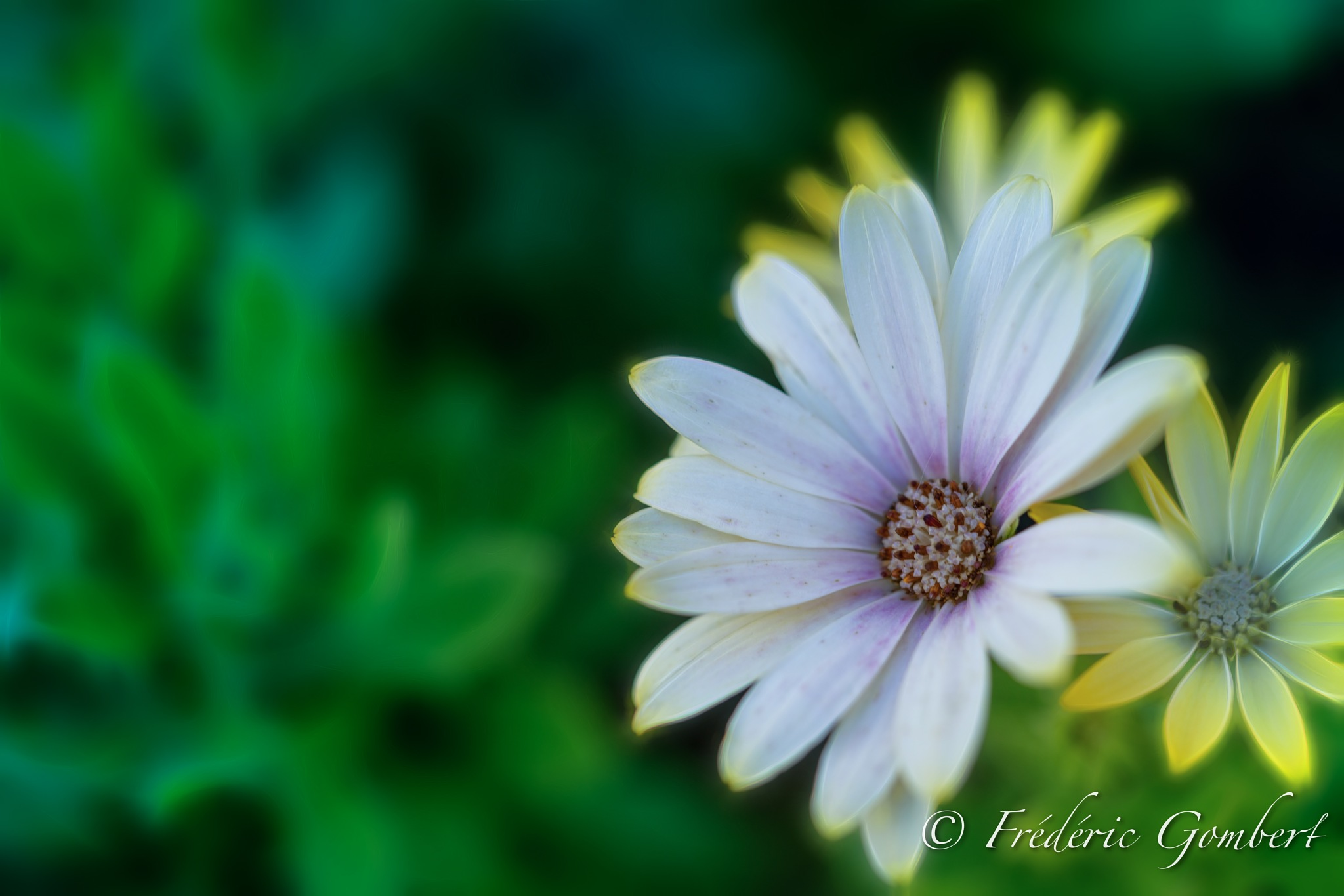 Arm Protection by Frederic Gombert