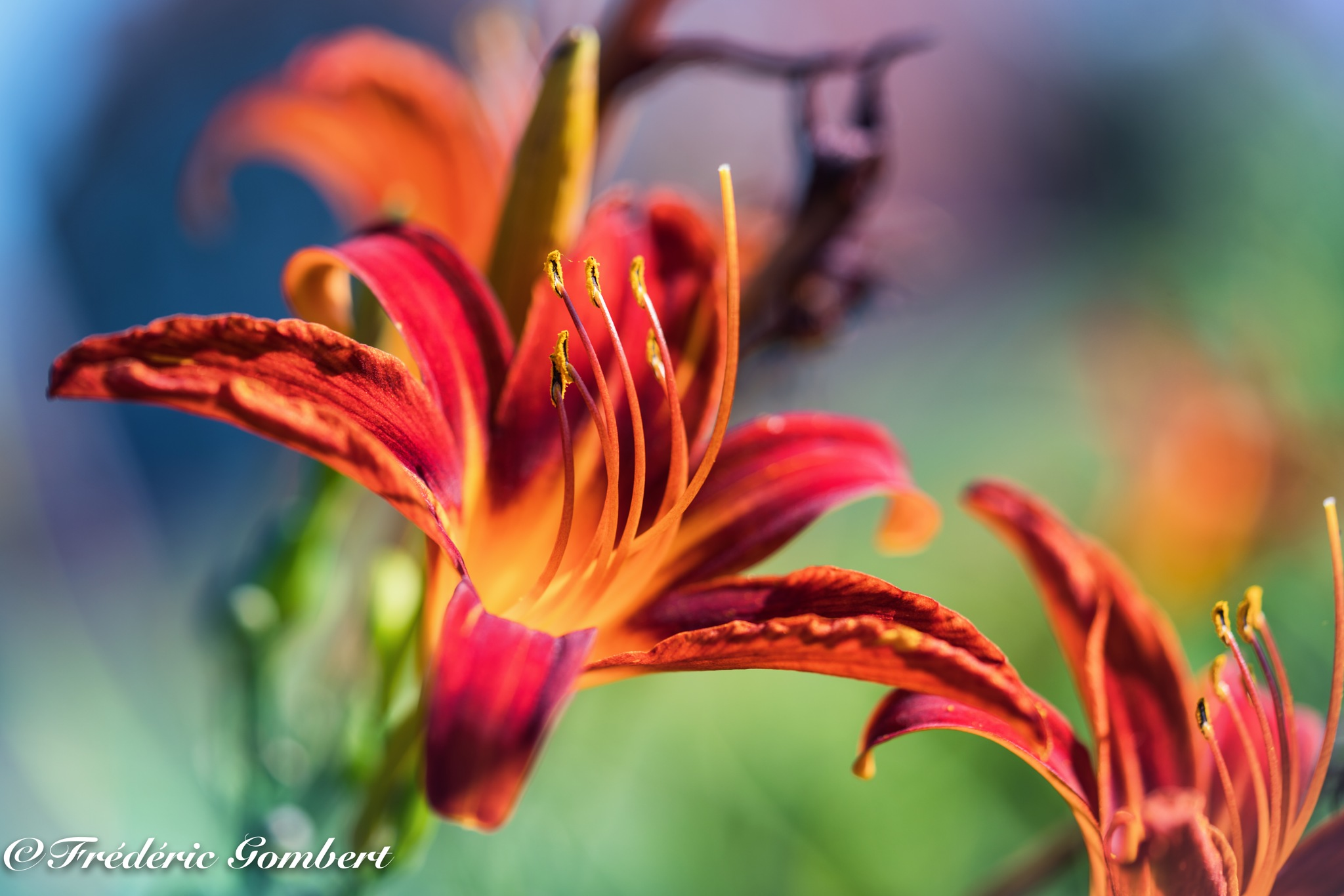 Hey.... by Frederic Gombert