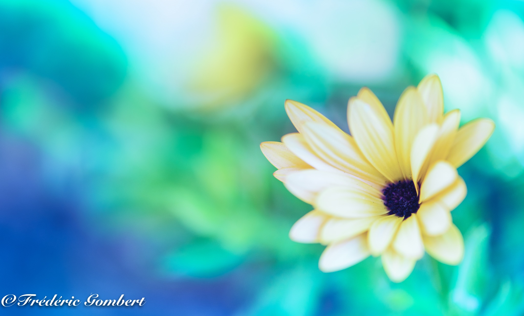 Light by Frederic Gombert