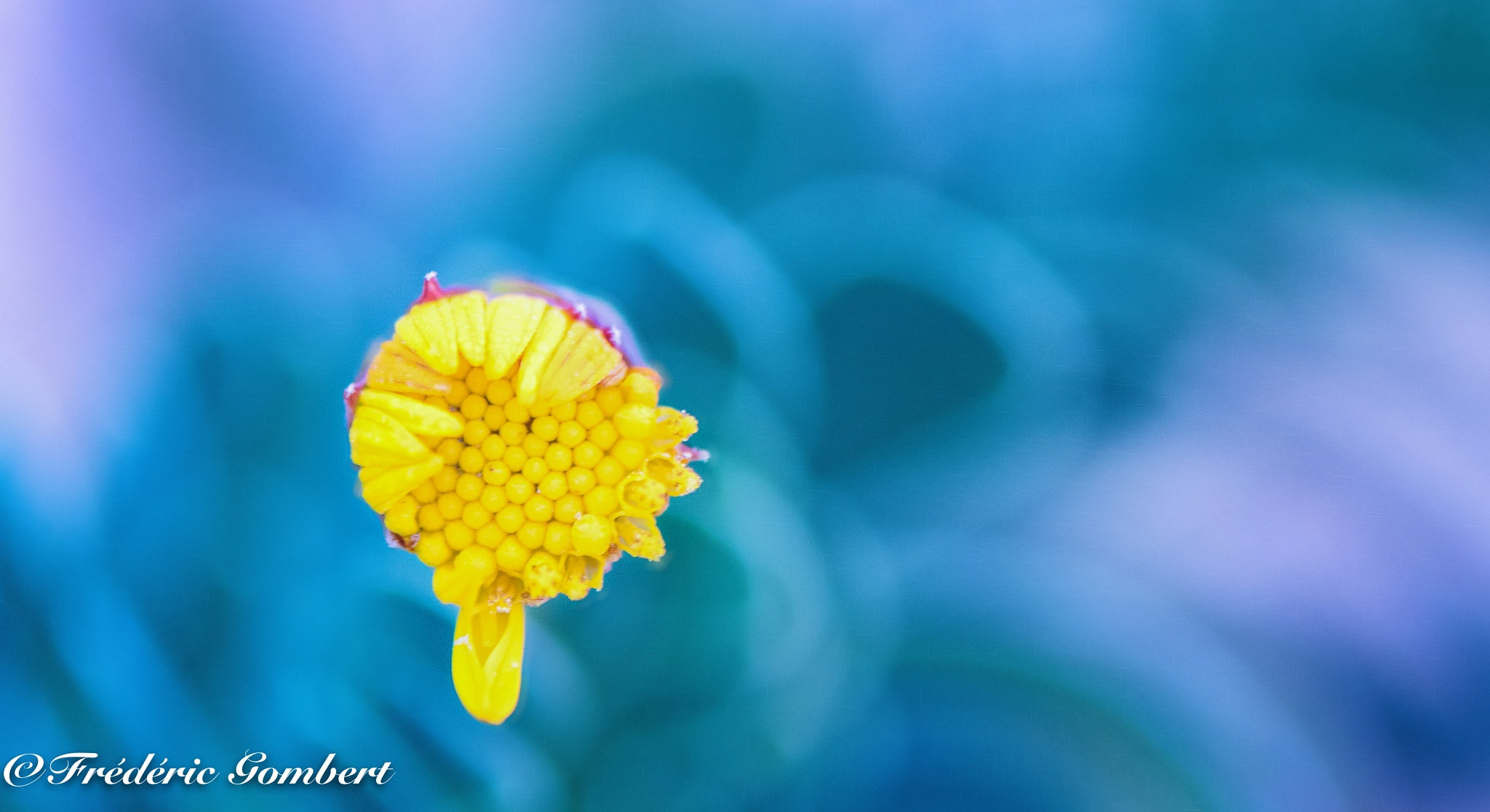 Shy in the garden by Frederic Gombert