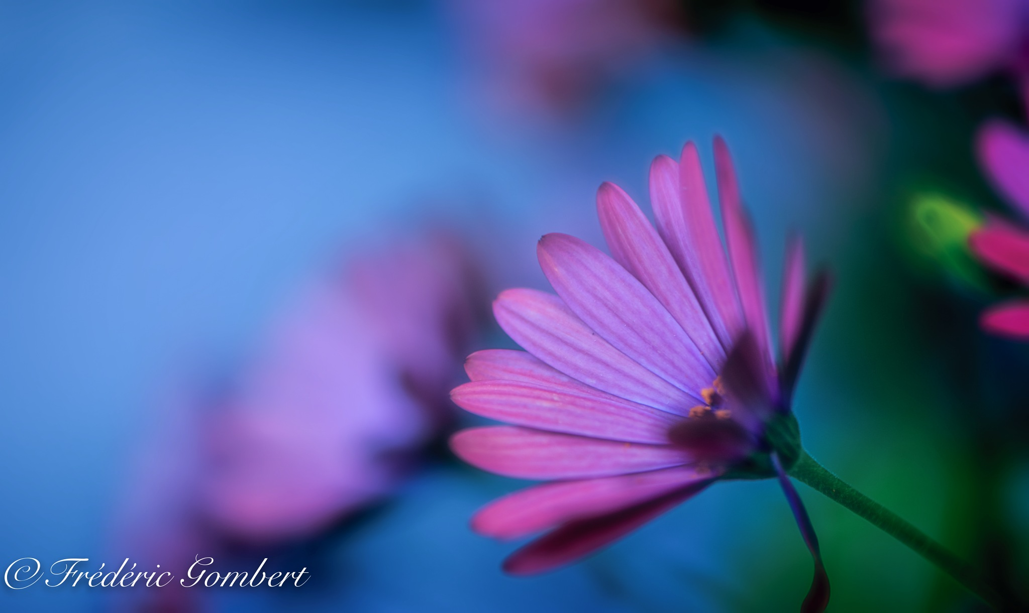 Blue Sky by Frederic Gombert