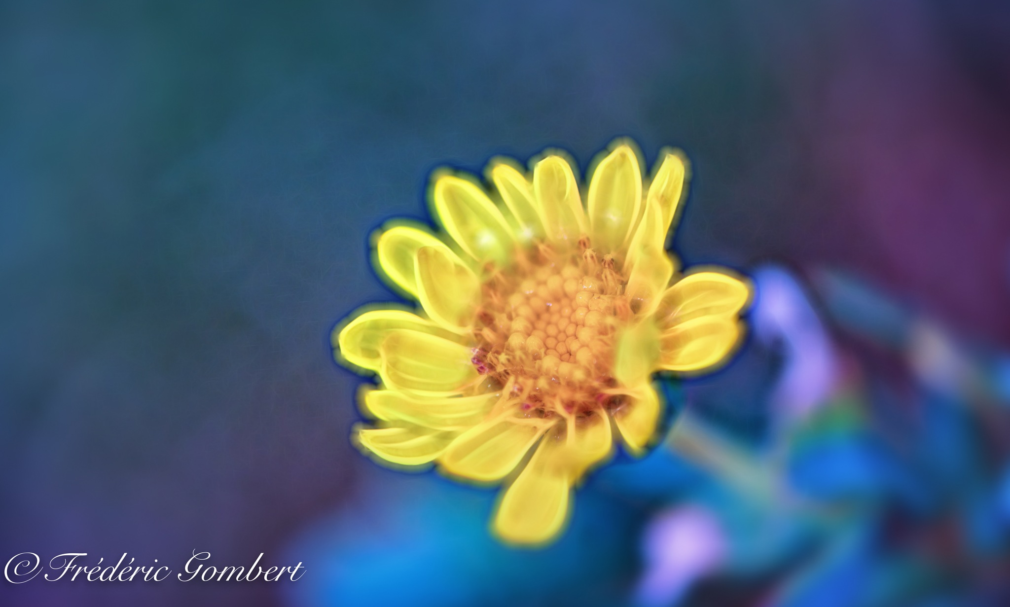 yellow droplets by Frederic Gombert