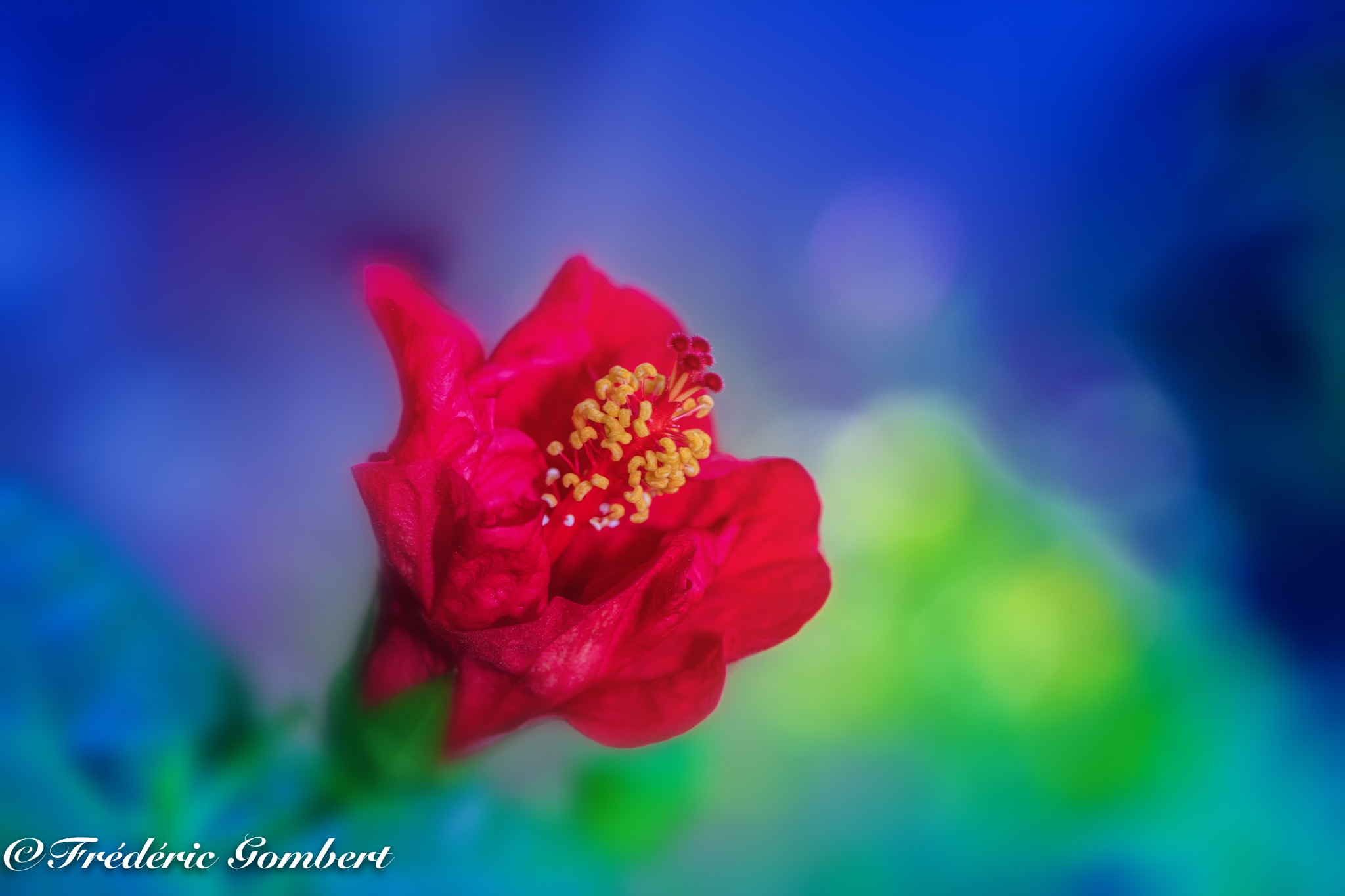 pointing heart (II) by Frederic Gombert