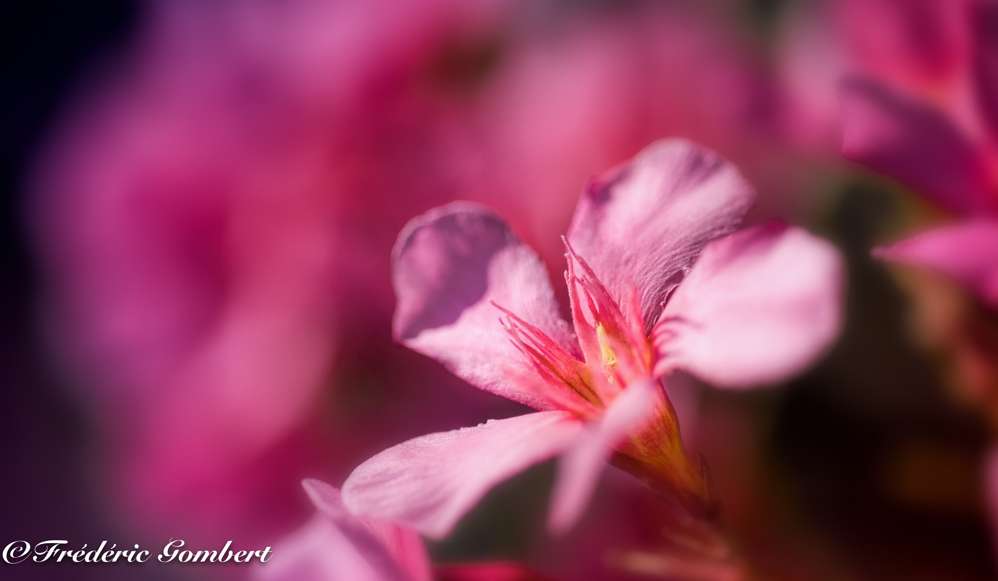 The sun shines by Frederic Gombert