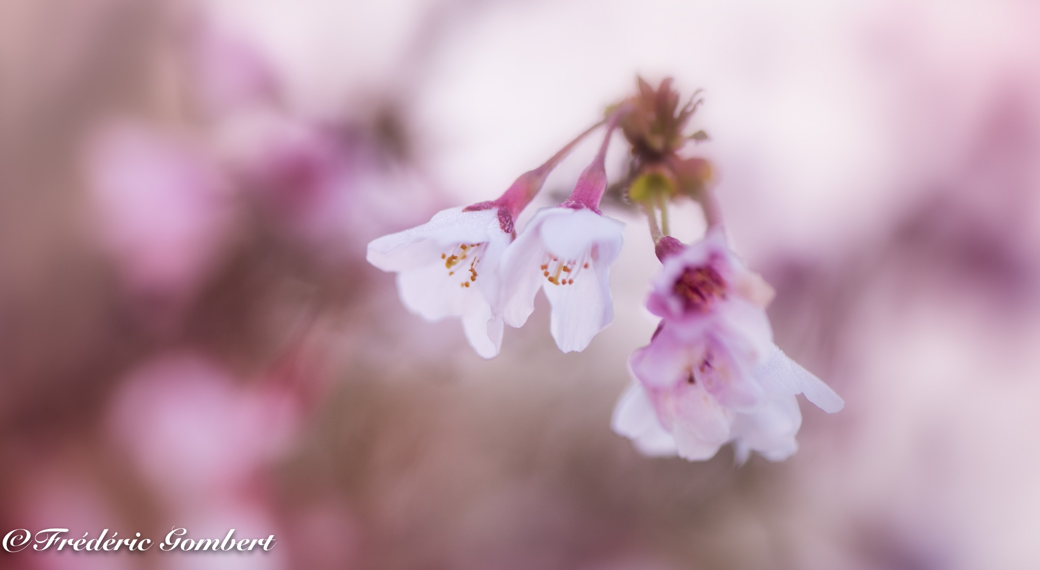 Fresh Spring  by Frederic Gombert