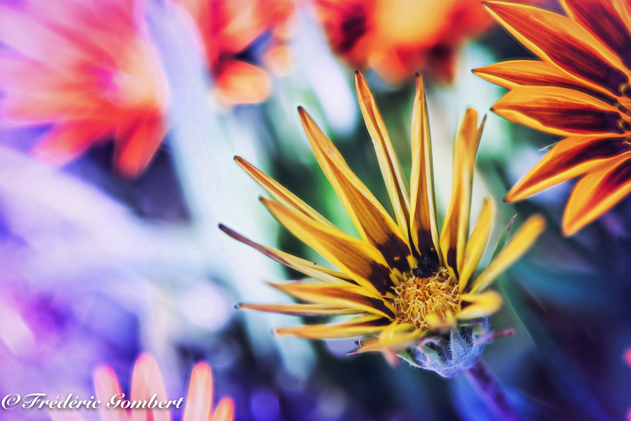 Looking for the Light by Frederic Gombert