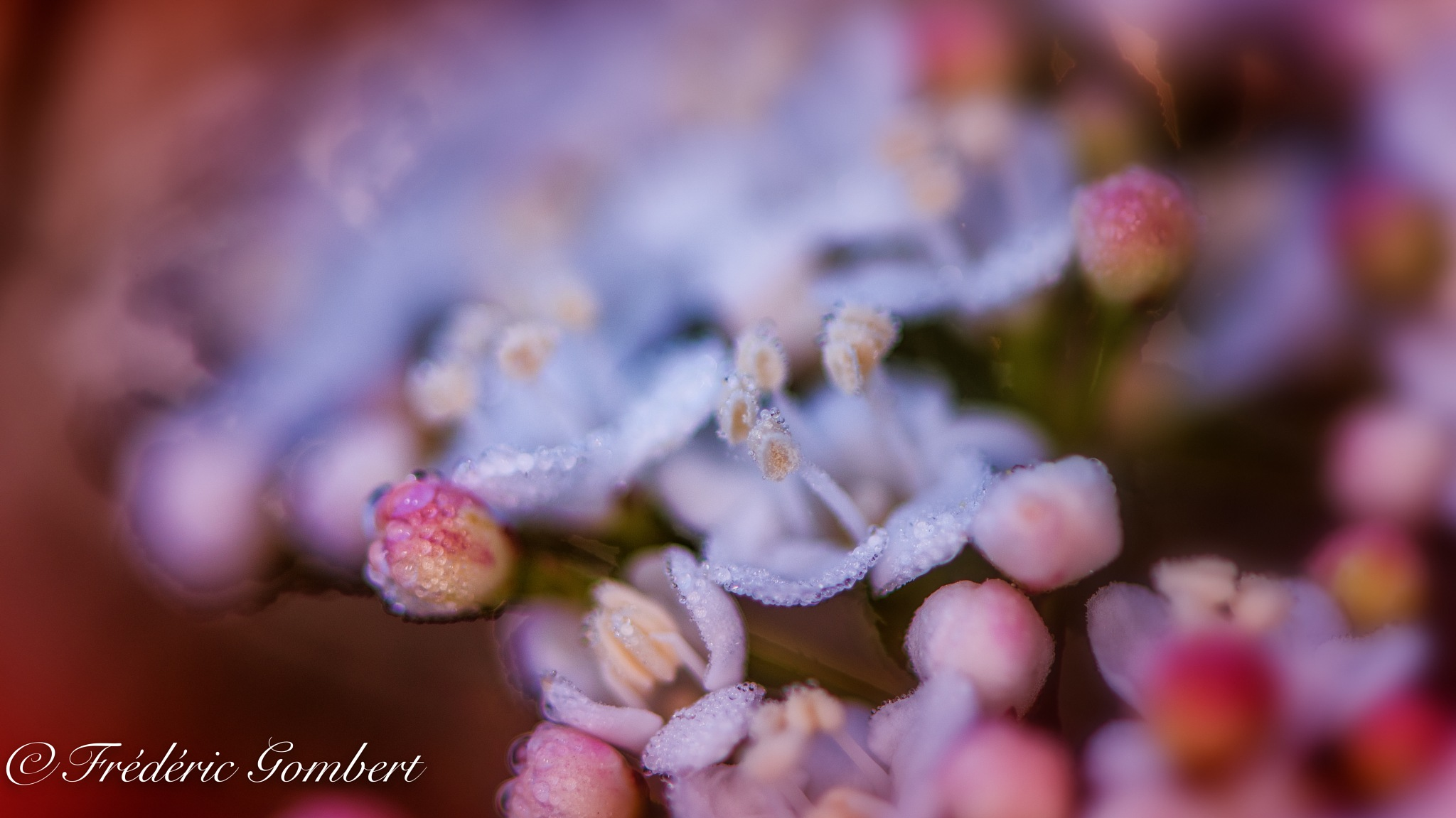 Morning effect by Frederic Gombert