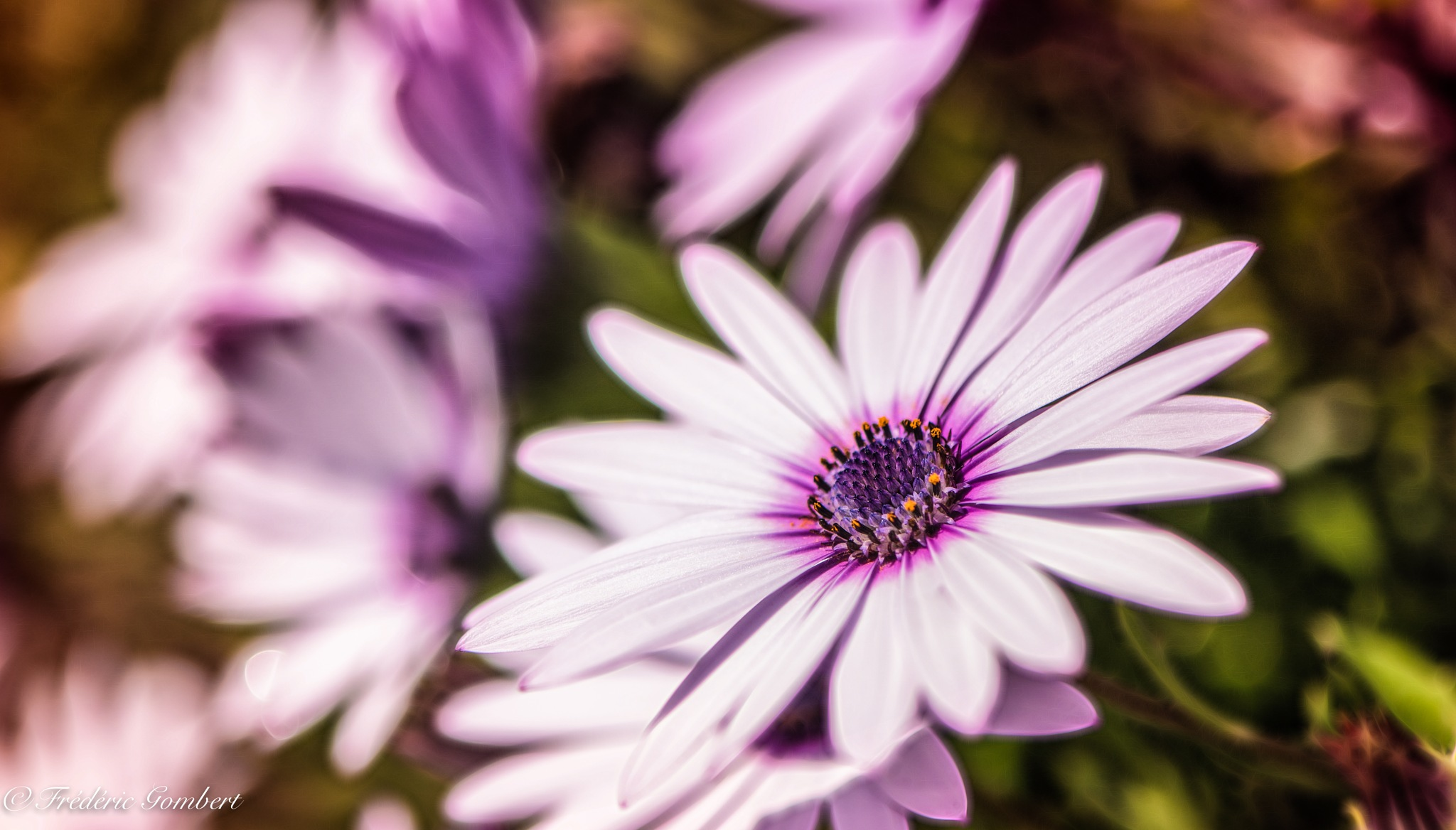 White  by Frederic Gombert