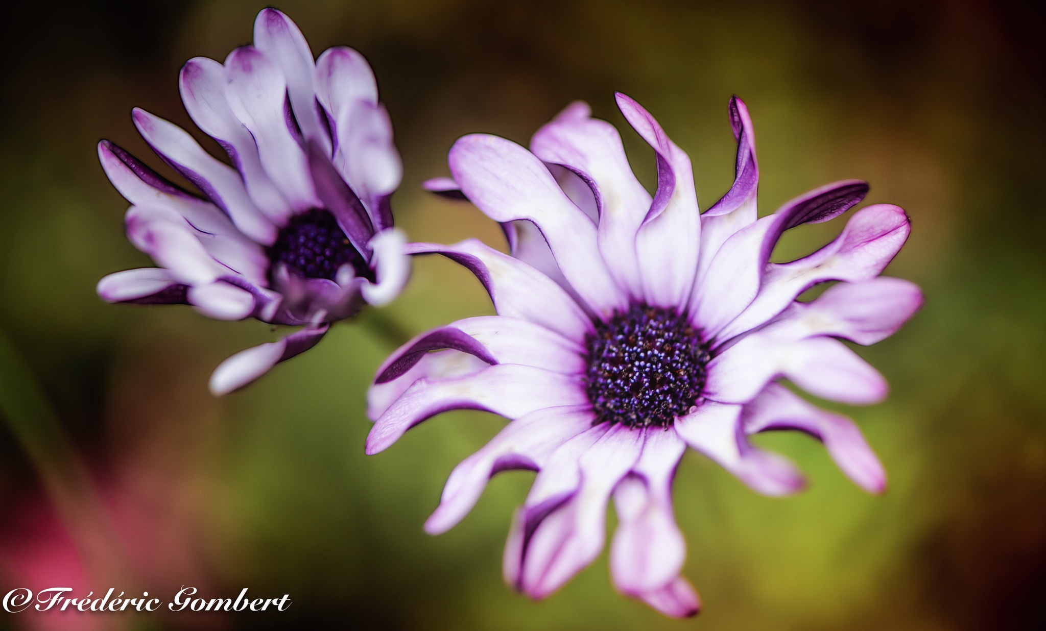 2 by Frederic Gombert