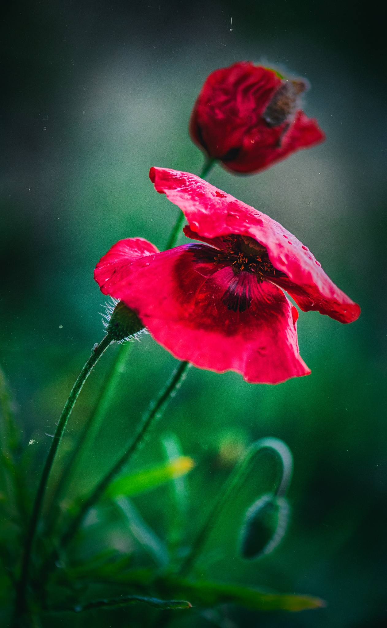 Spring red portraits by Frederic Gombert